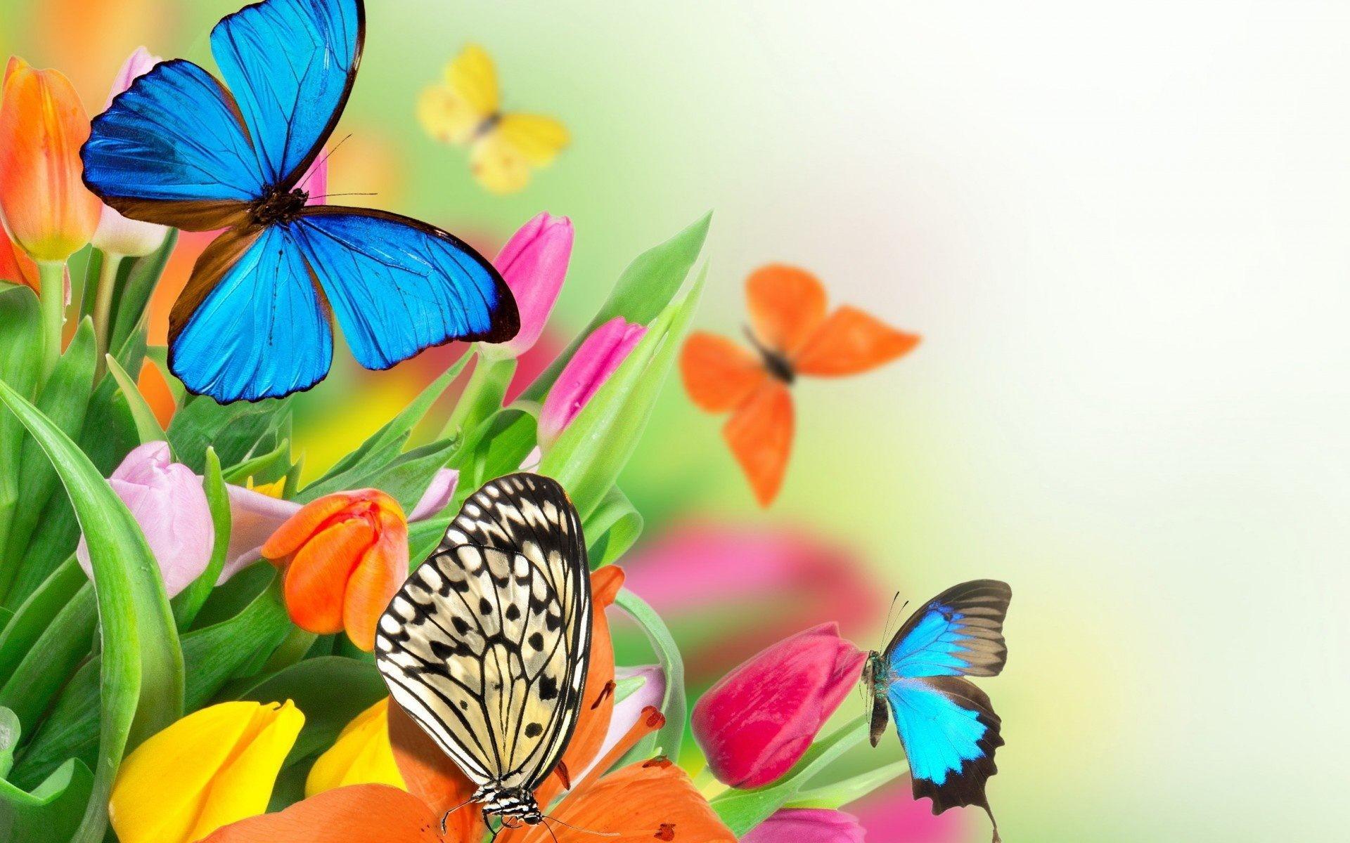 Colorful Butterfly On Flower Wallpaper For Desktop amp Mobile