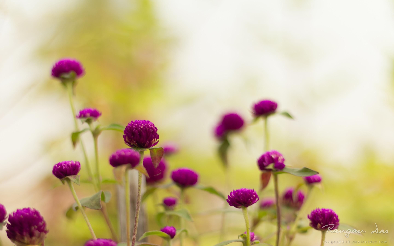Purple garden flower wallpaper -AtozWallpaper