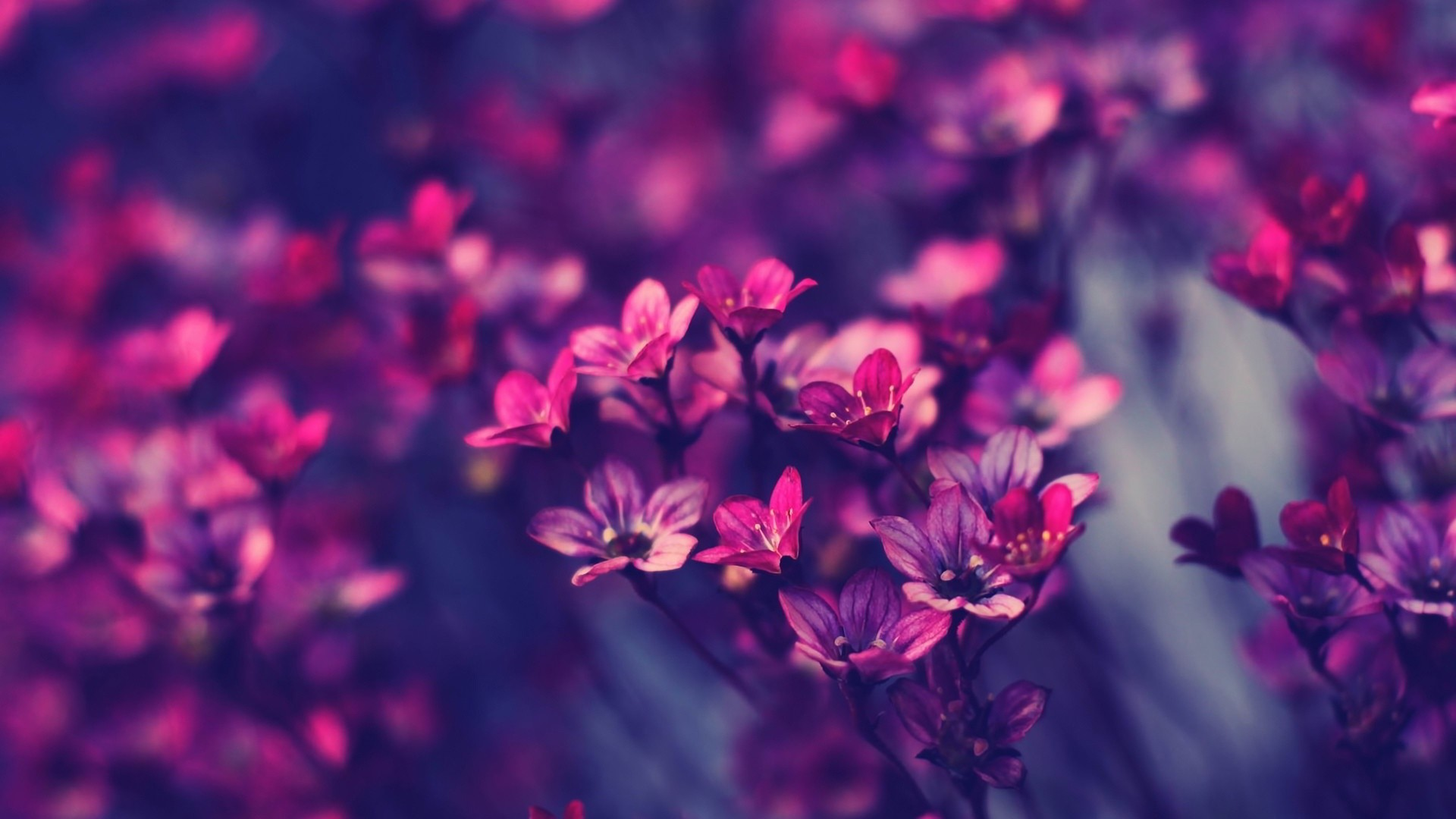 8. flower-wallpaper-for-walls8-600×338