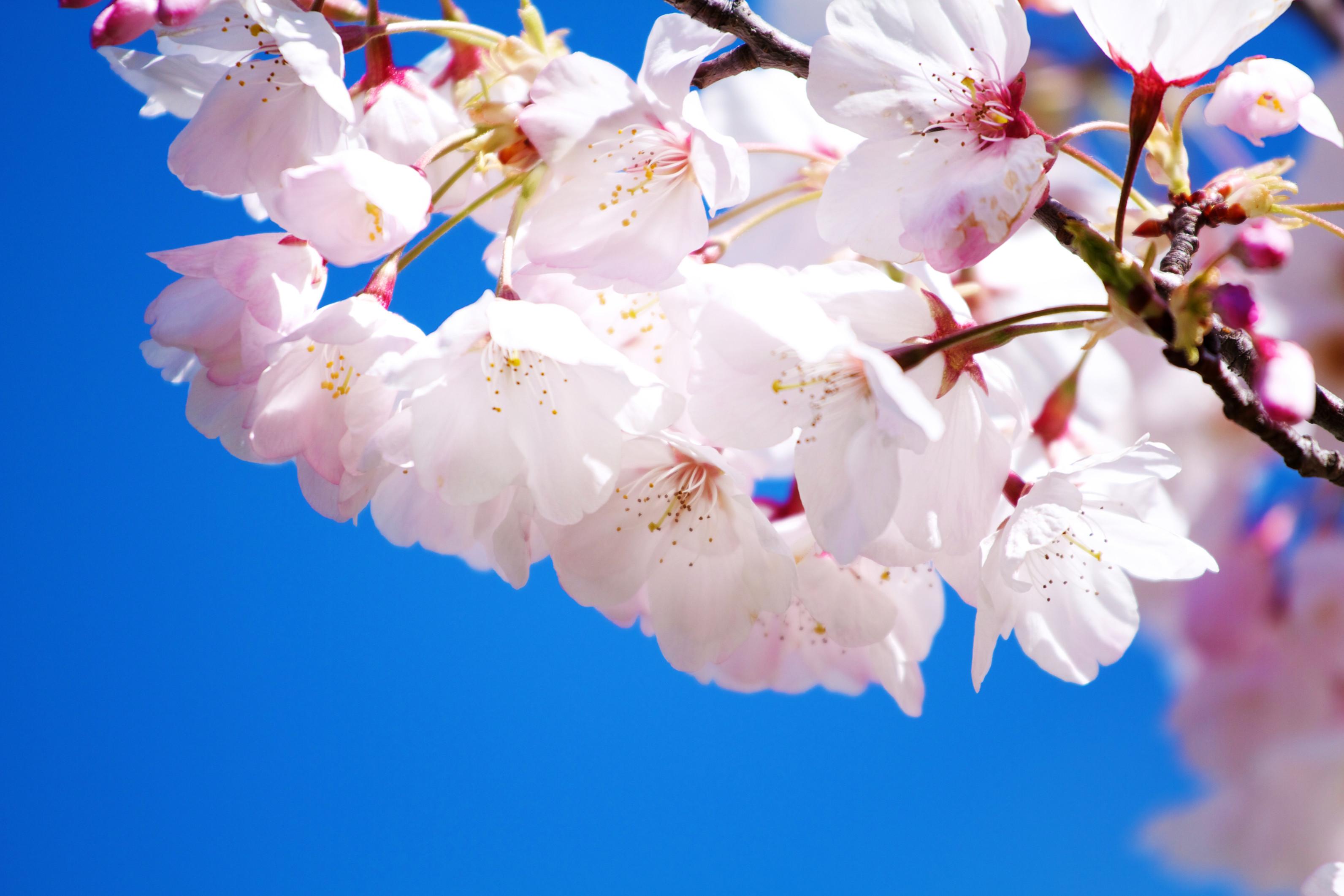 Free Flower Wallpaper Download