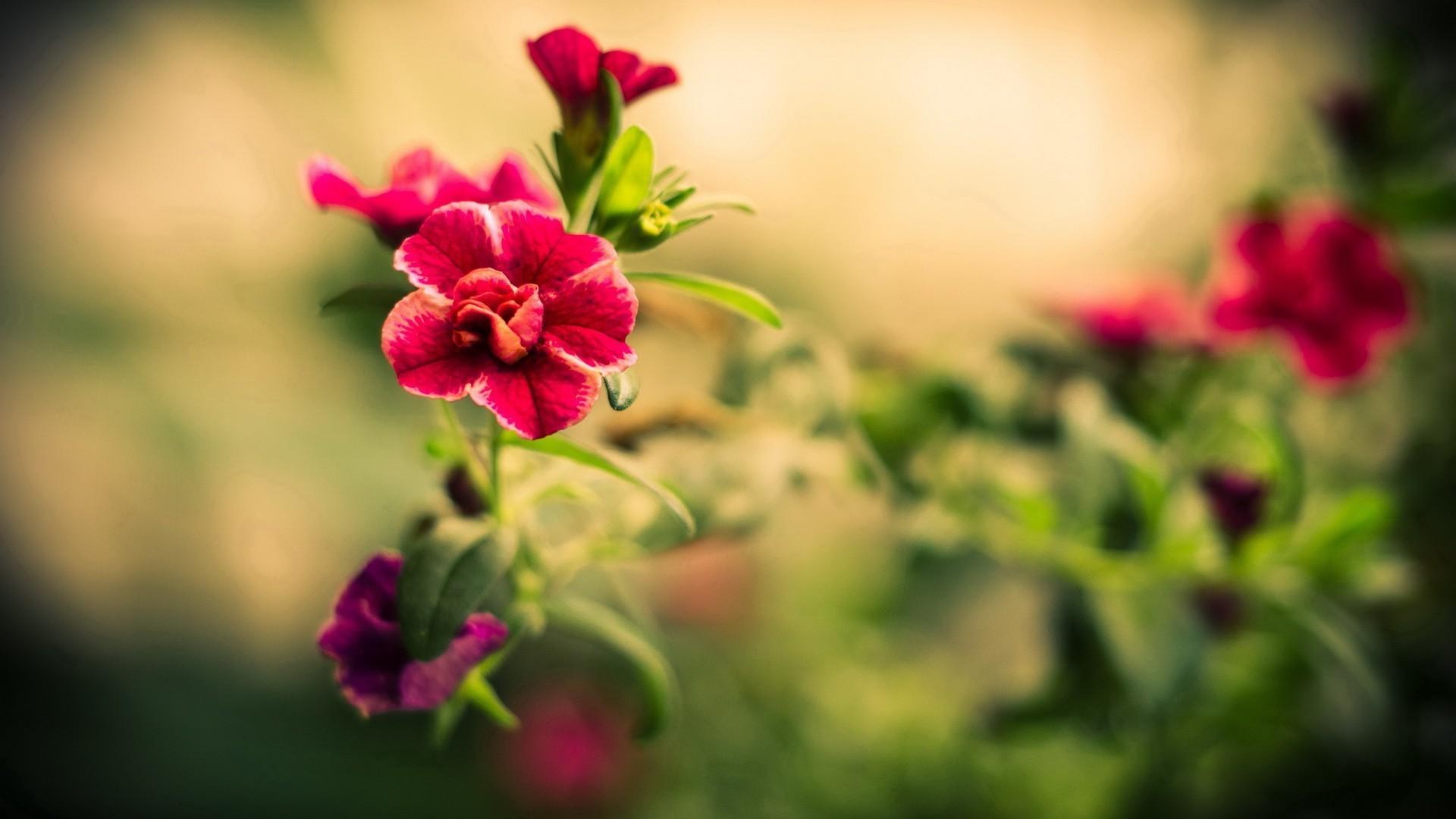 10. pretty-flowers-wallpaper10-1-600×338