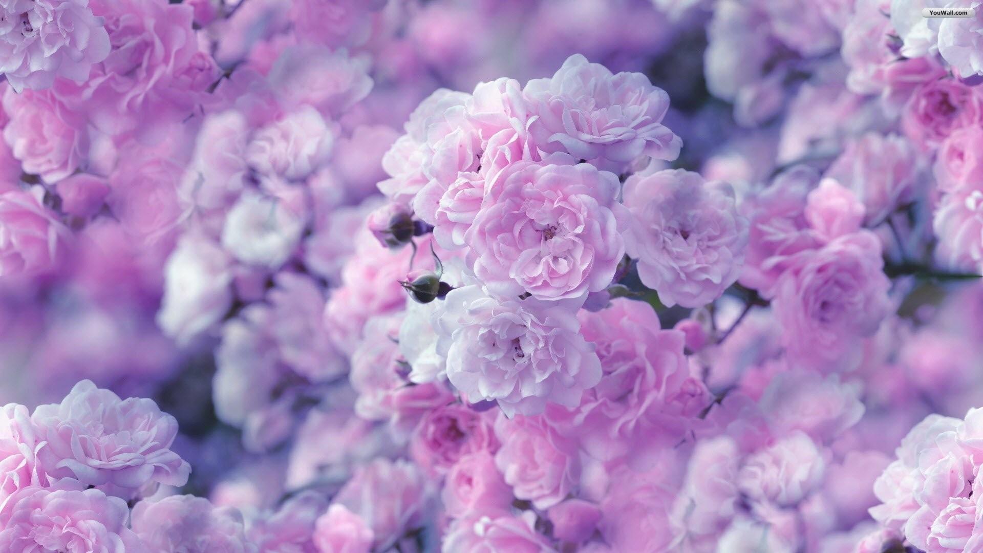 Beautiful Tiny Flowers Wallpaper