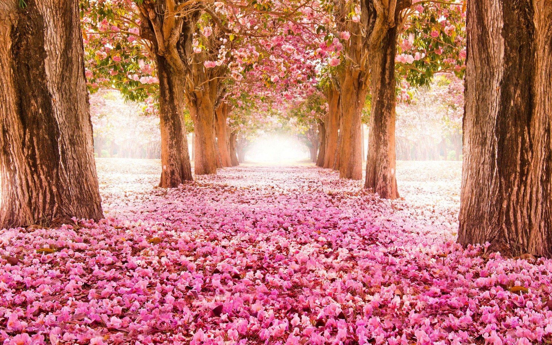 Spring Flowers Wallpapers HD | PixelsTalk.Net