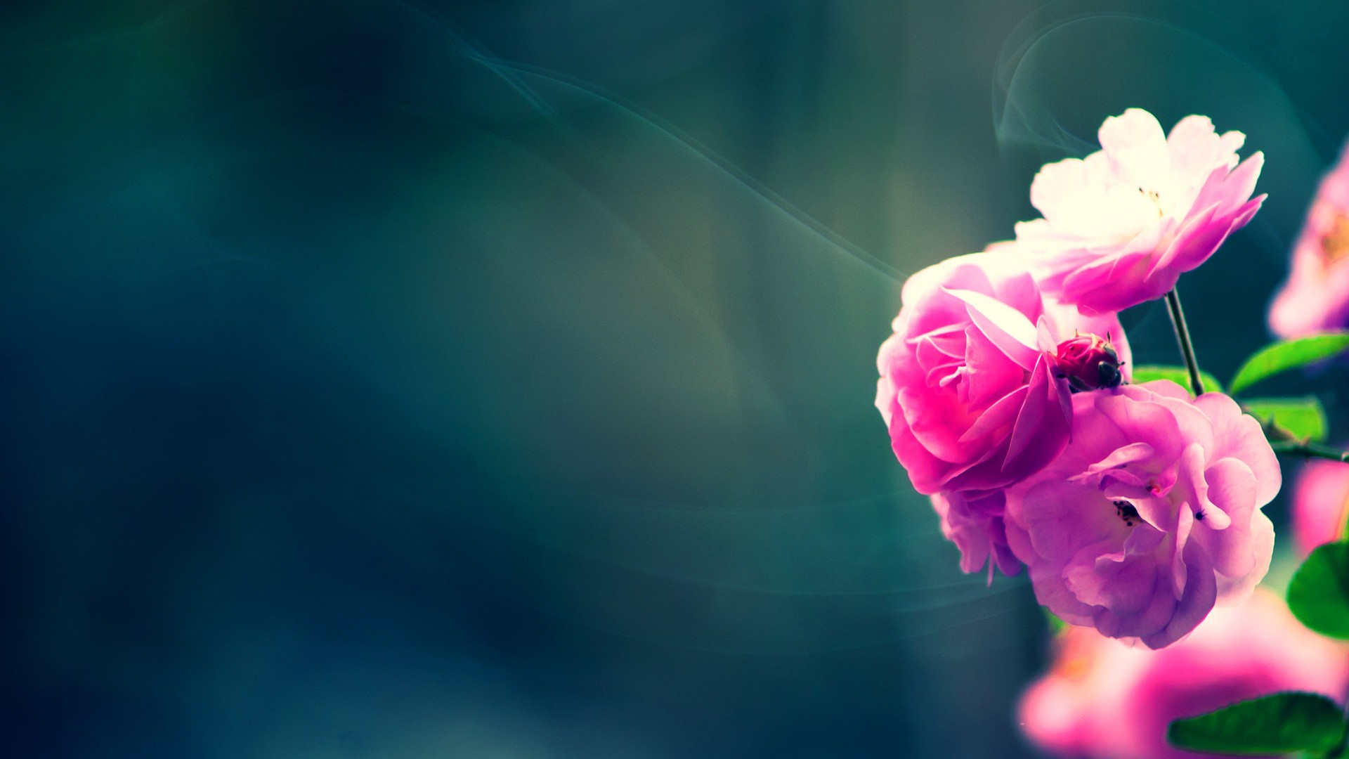 Full HD p Flowers Wallpapers, Desktop Backgrounds HD, Pictures Flower  Wallpaper Hd Wallpapers)