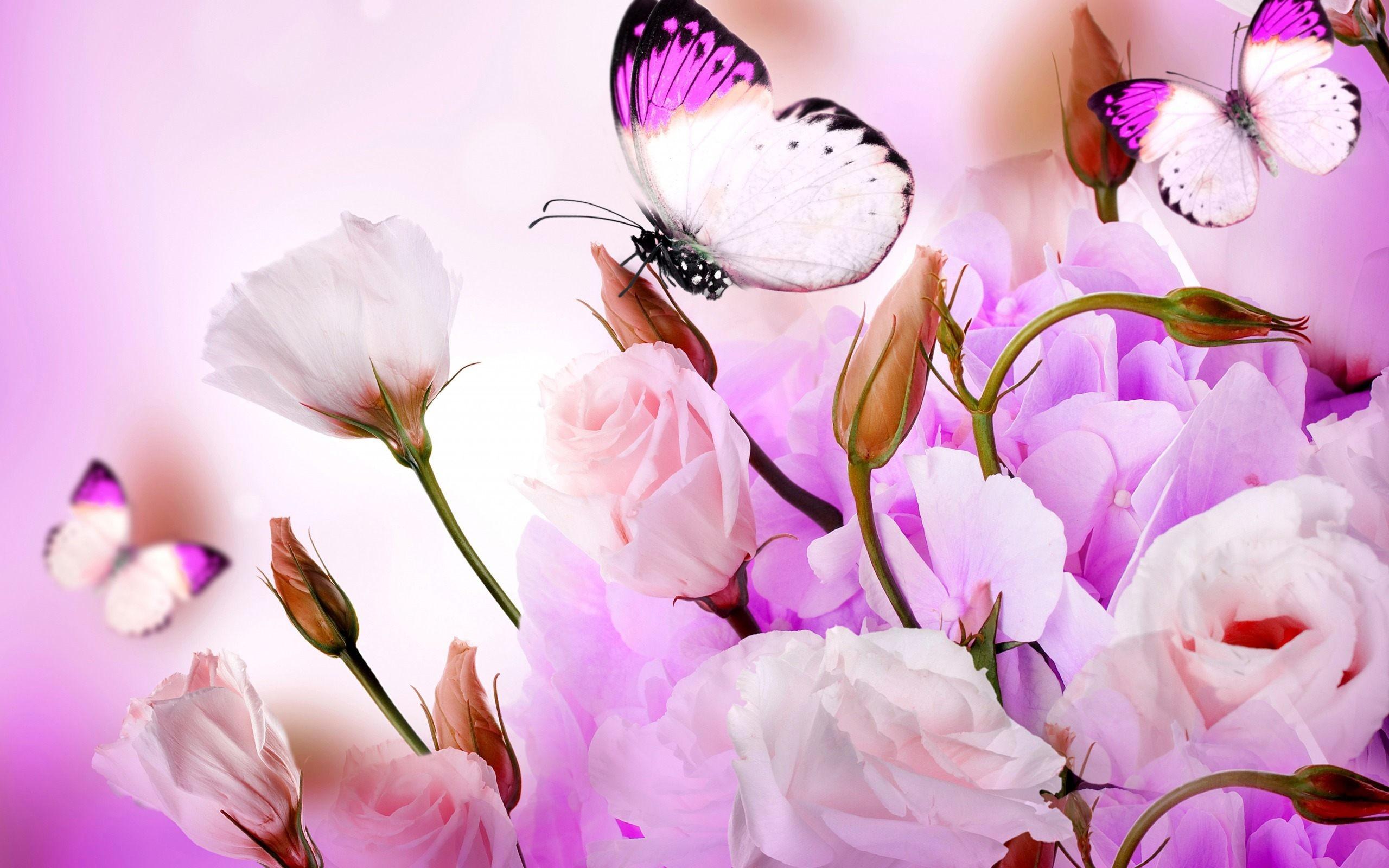 0 Flower Butterfly Wallpaper Pixels Talk Flower With Butterfly Wallpaper HD  Download High Quality