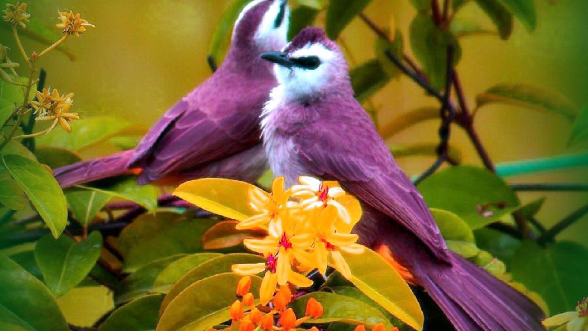 … download birds and flower wallpaper gallery …