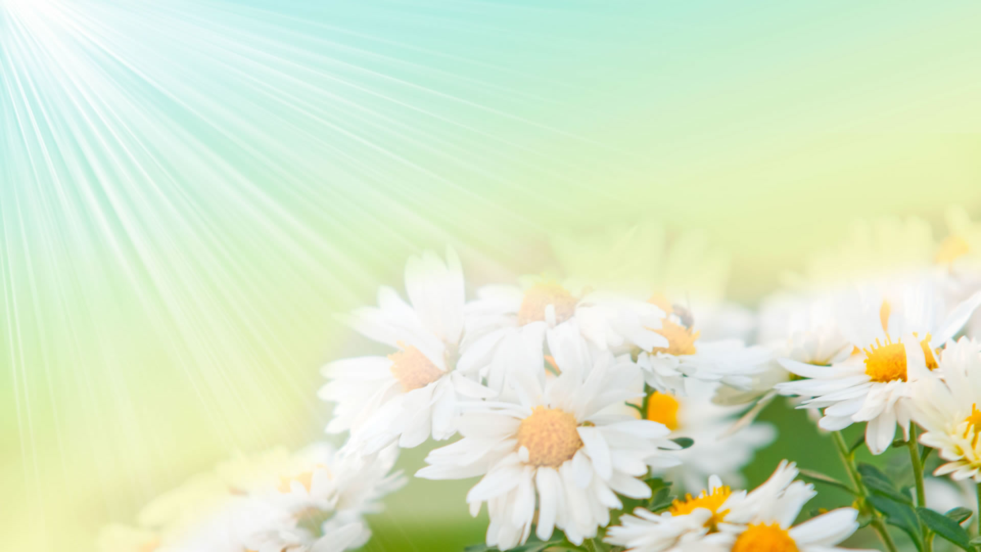 8. pictures-of-flowers-wallpaper8-600×338