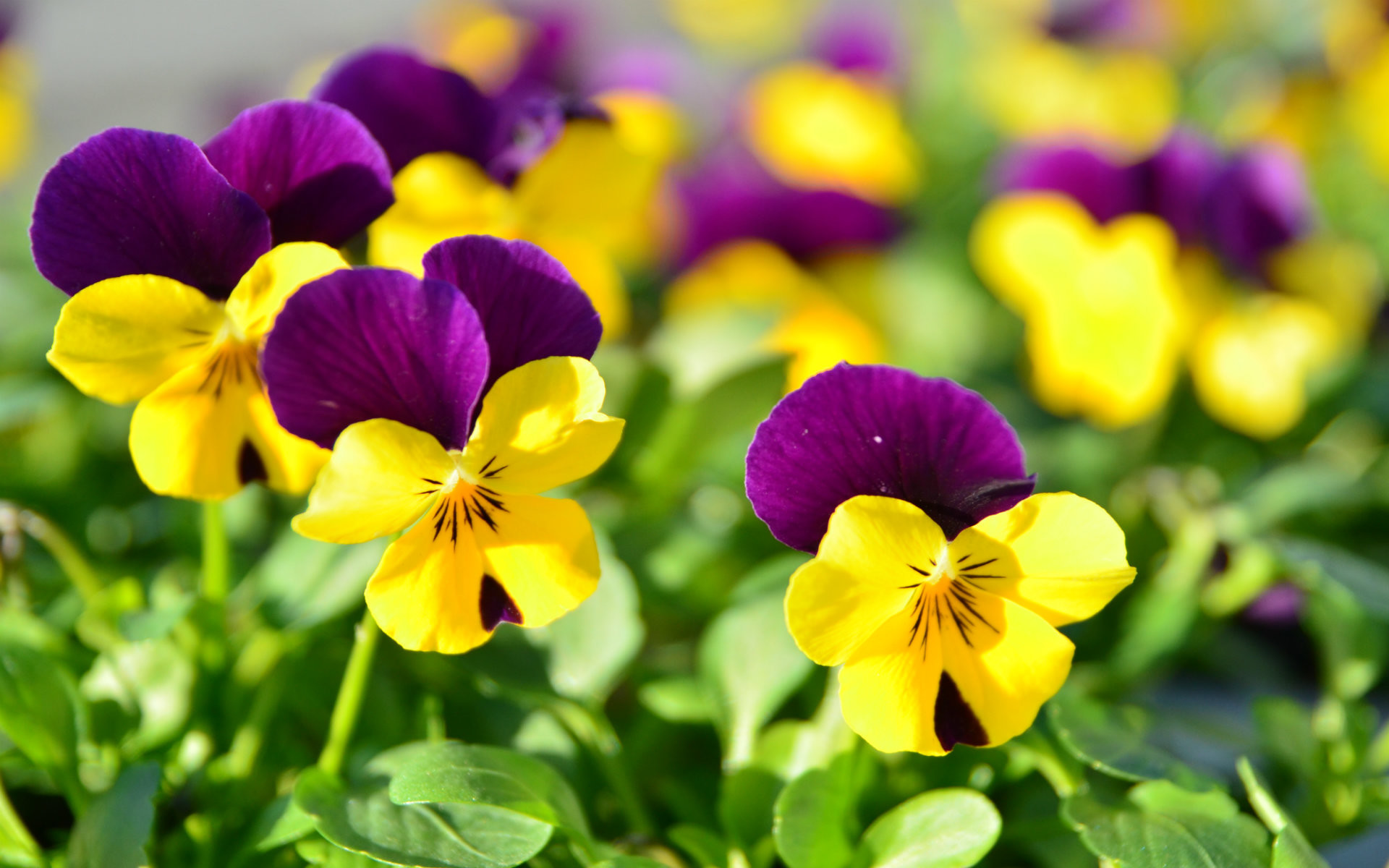 Free Download Most Beautiful Flowers Wallpaper