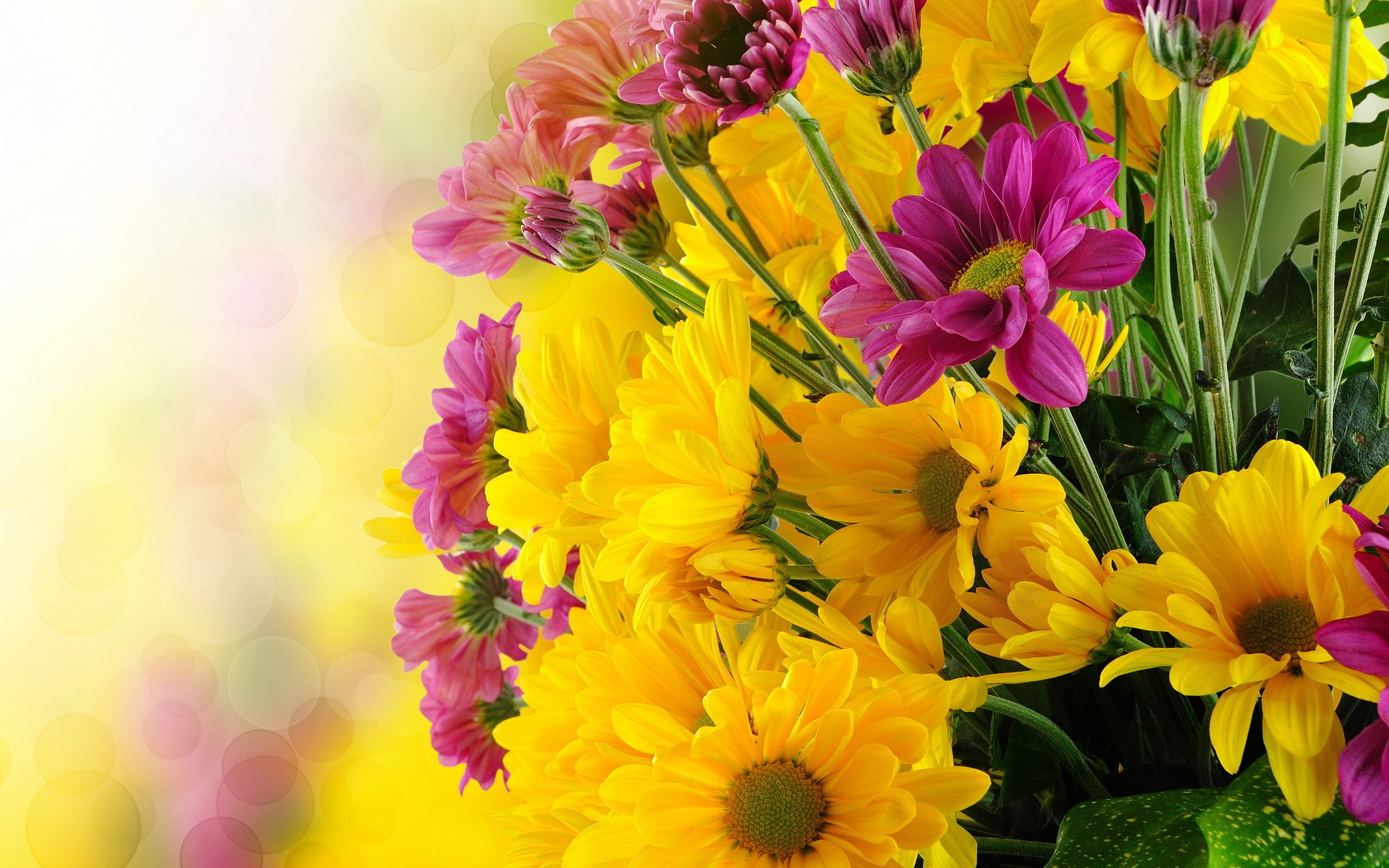 BUNCH PINK YELLOW FLOWERS – Online Wallpapers HD