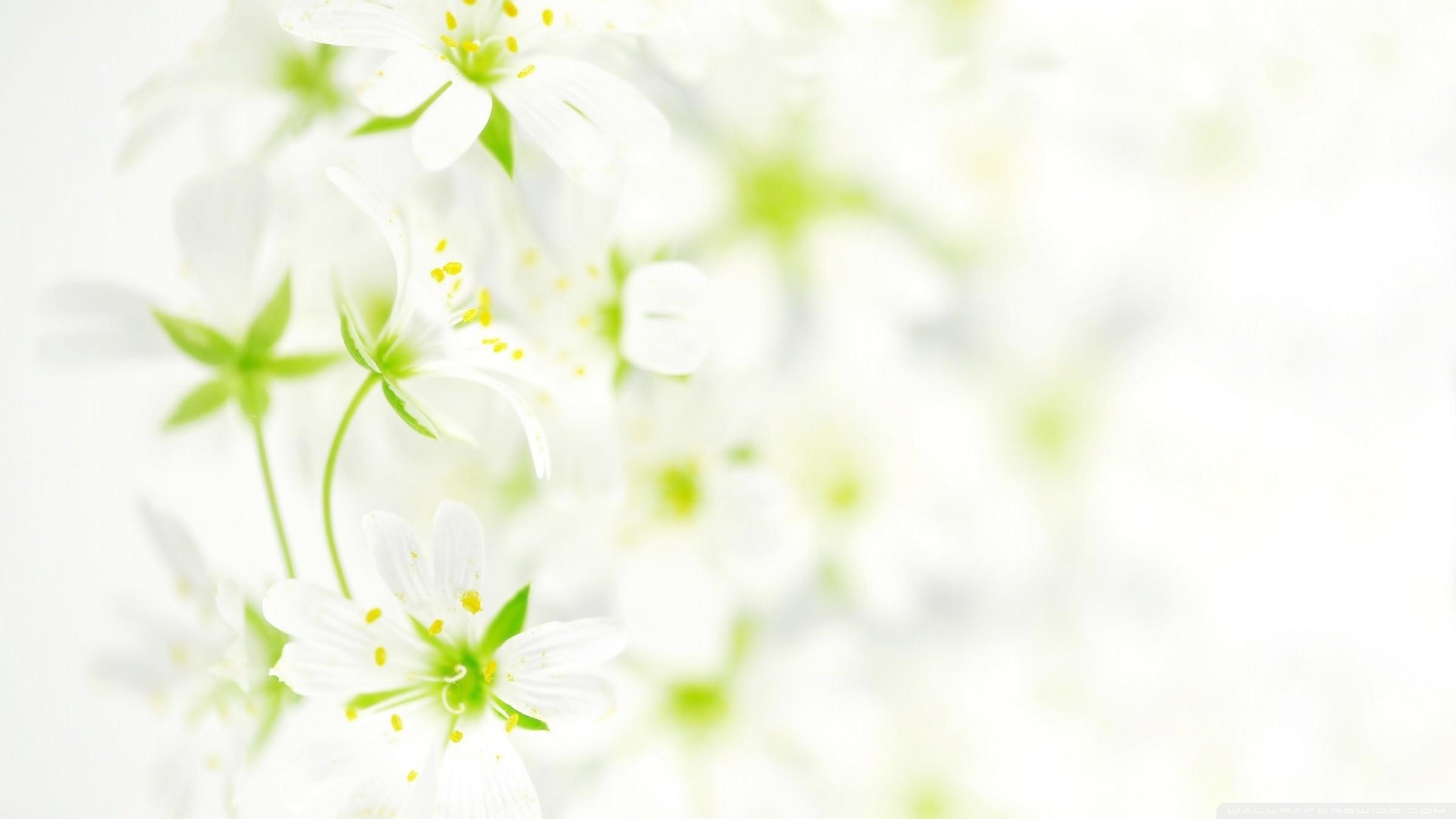 White Flowers Wallpaper HD