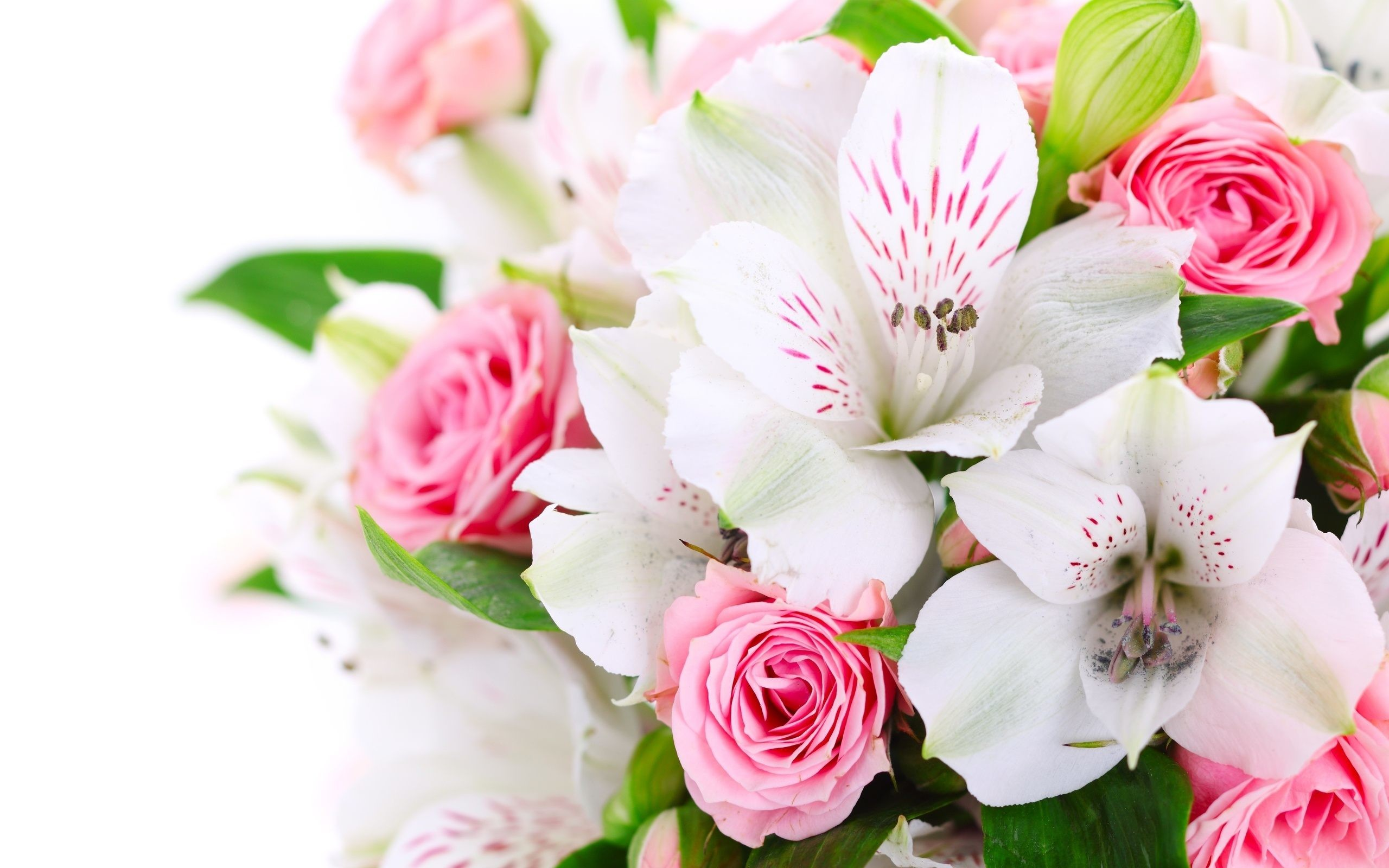 Pink Roses and Orchid Flowers Wallpaper