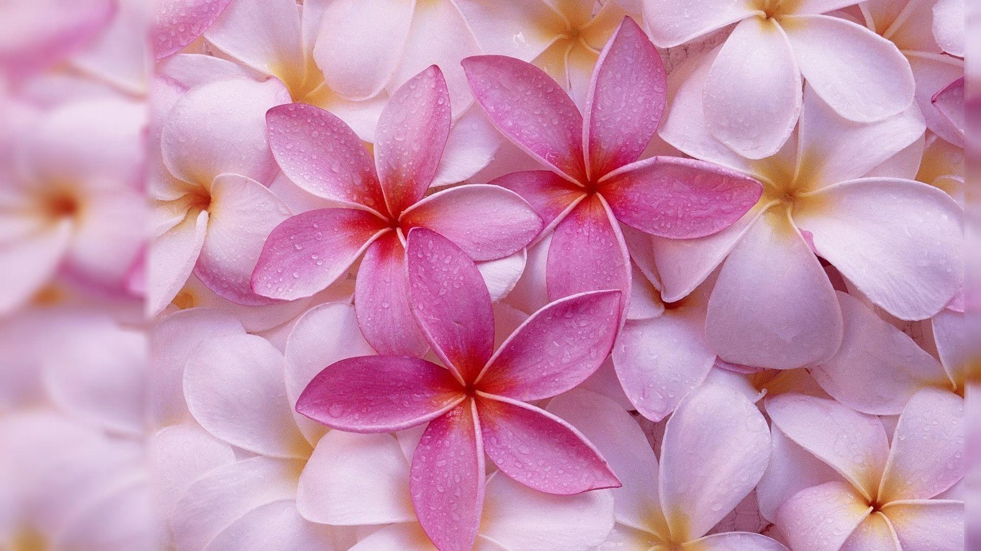 6. pressed-flowers-wallpaper6-600×338