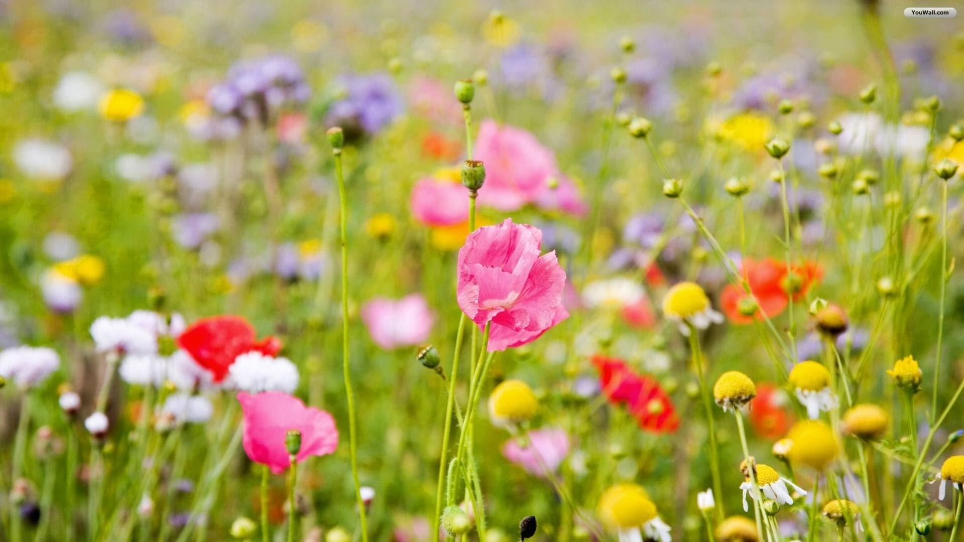 8. flower-wallpaper-border10-600×338