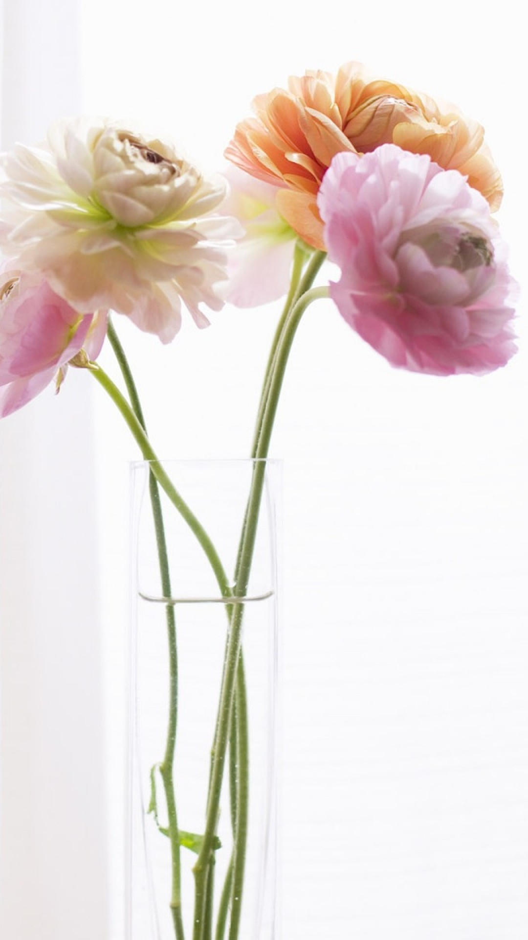 Preview wallpaper peonies, flowers, vase, curtains 1080×1920