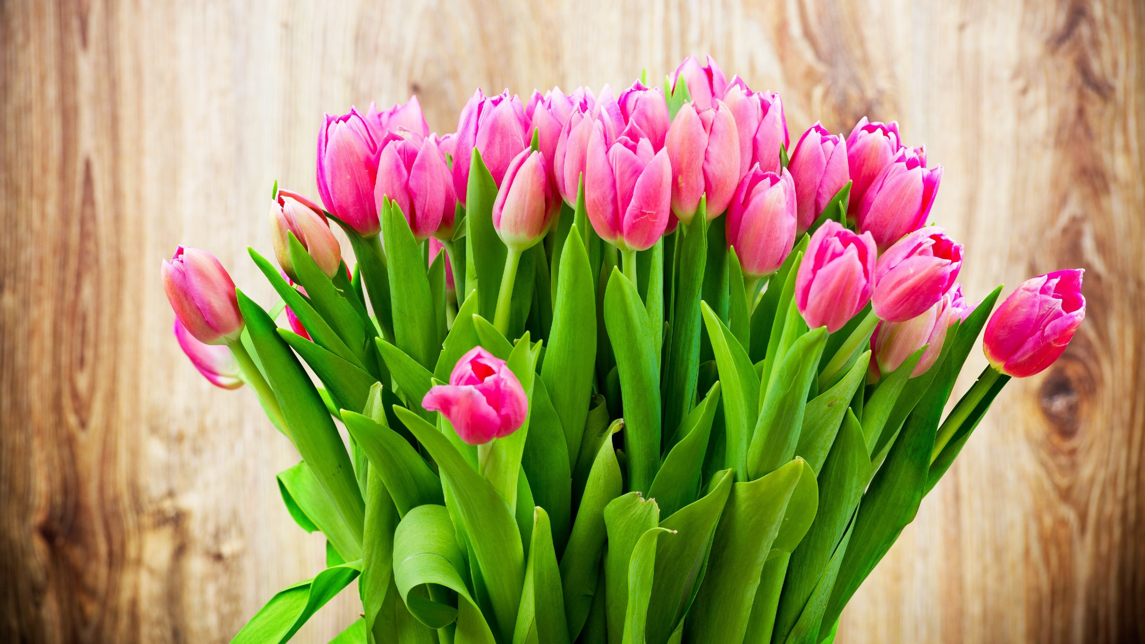 Tulips HD Backgrounds for PC