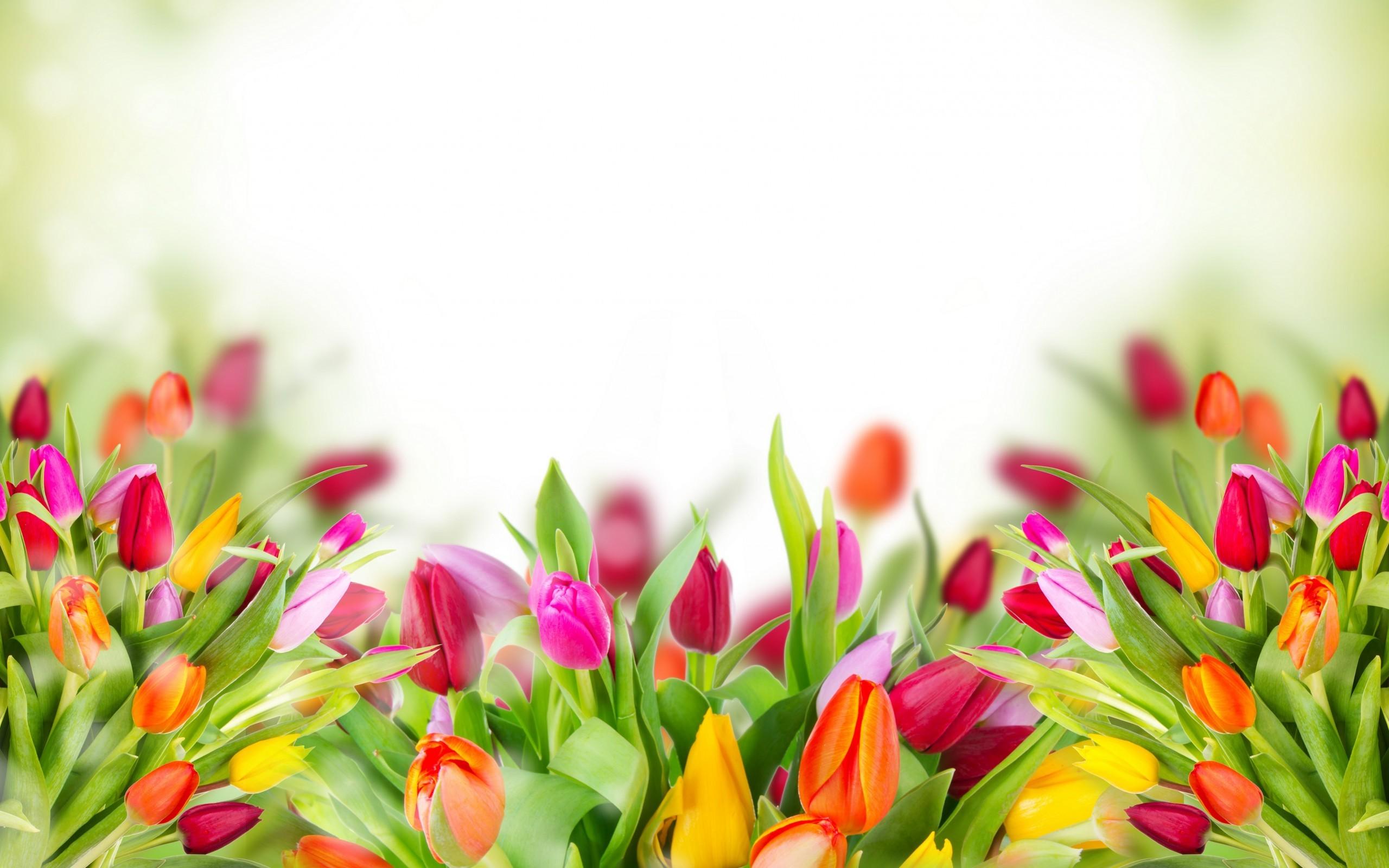 Full HD p Tulips Wallpapers HD Desktop Backgrounds x