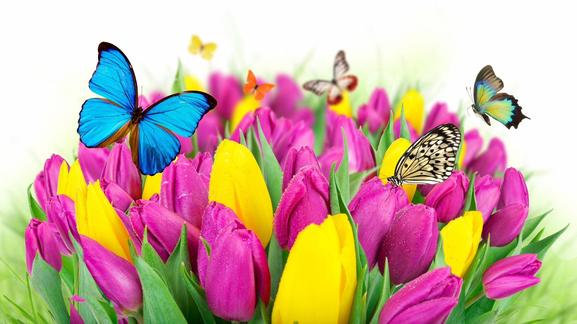 Preview wallpaper tulips, flowers, butterflies, colorful 1920×1080
