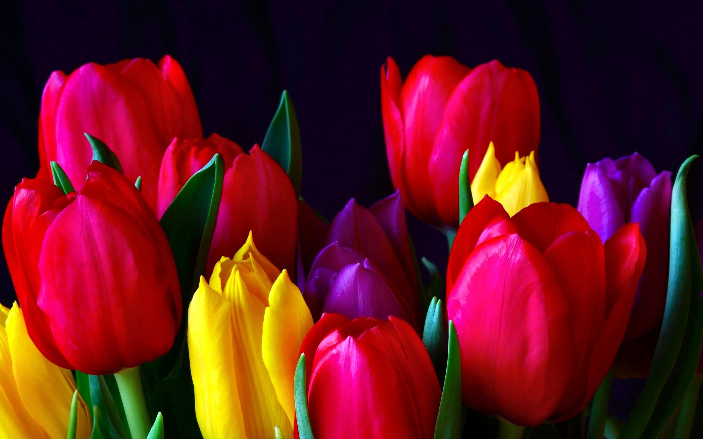HD Wallpaper | Background ID:328195. Earth Tulip