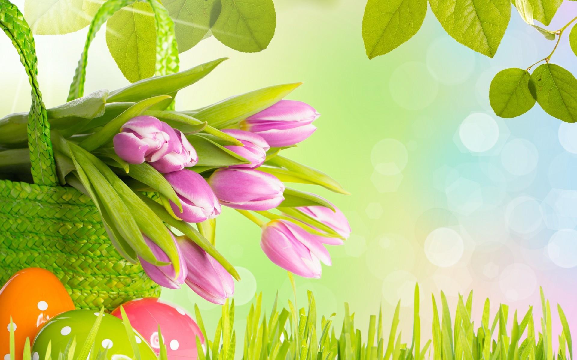 Easter Tulips Wide Desktop Background wallpaper free