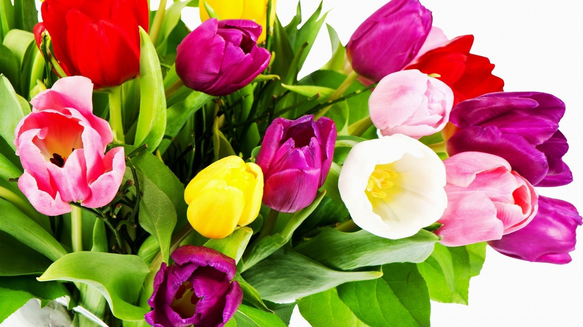 Wallpaper tulips, flowers, bouquet, bright, colorful, white  background