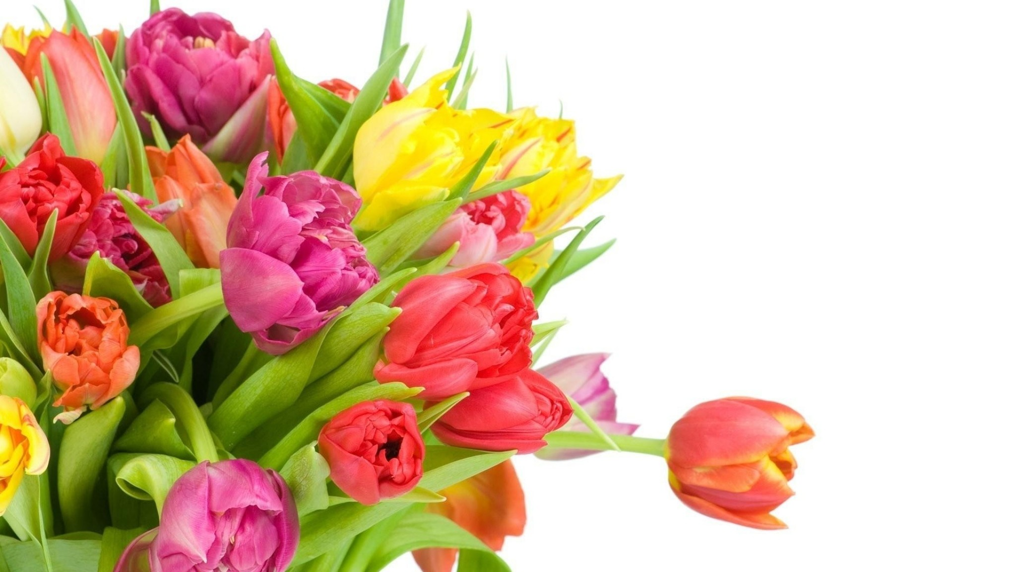 Wallpaper tulips, flowers, bouquet, bright, white background