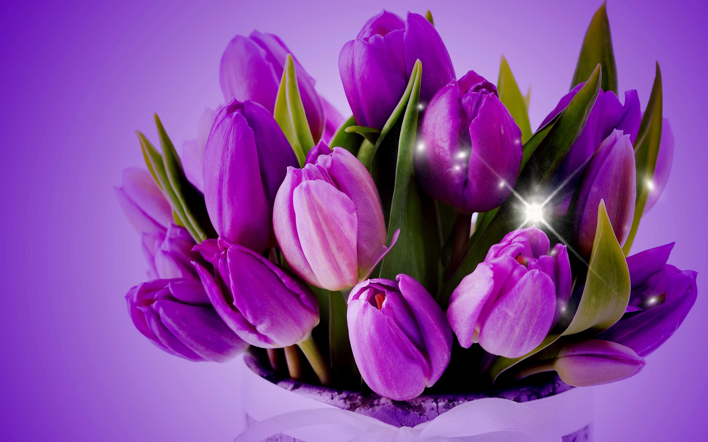Download Purple Tulips HD Desktop Wallpapers. We select the best .