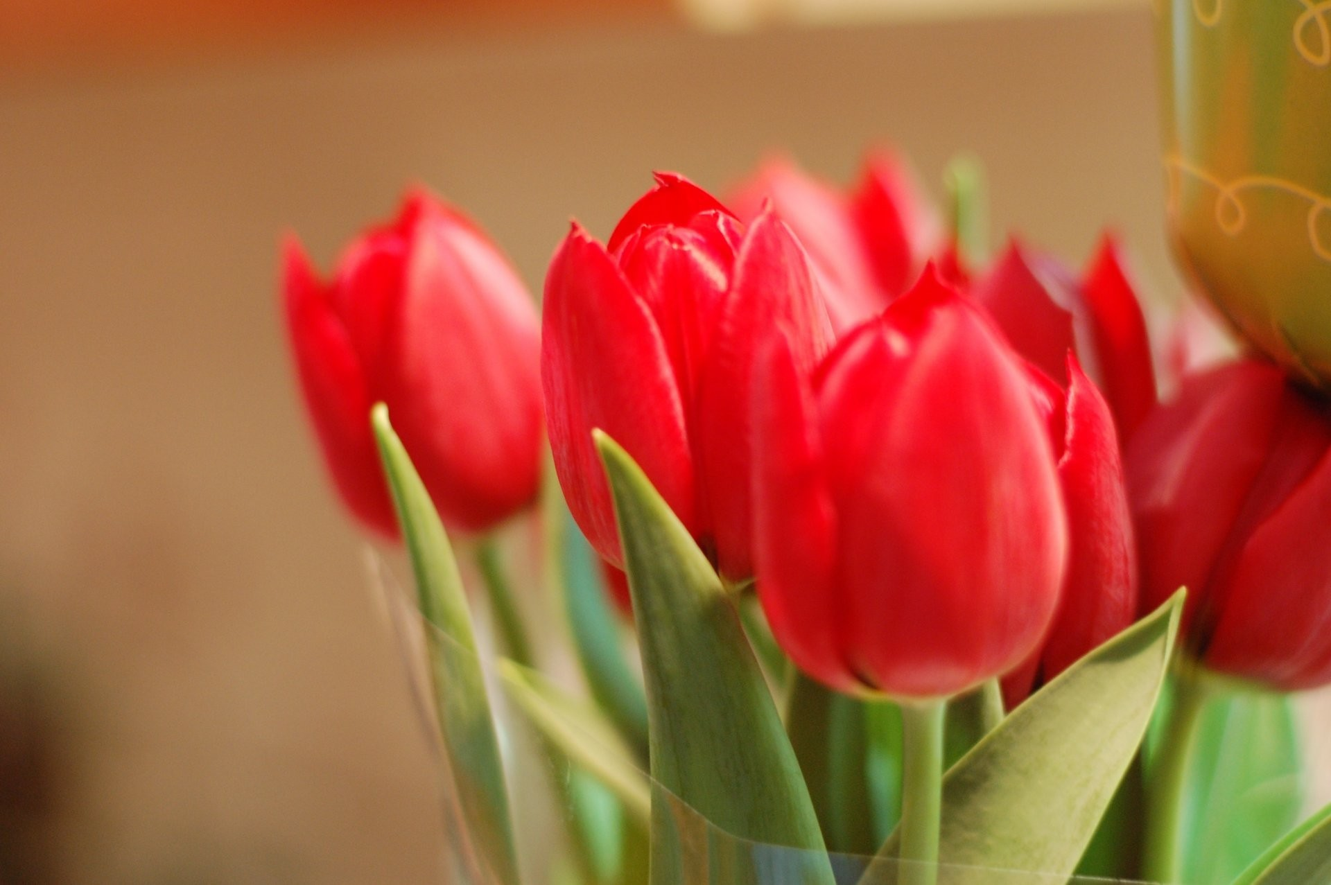 flower flowers tulips red petals bud buds close up leaves leaves background  wallpaper widescreen full screen