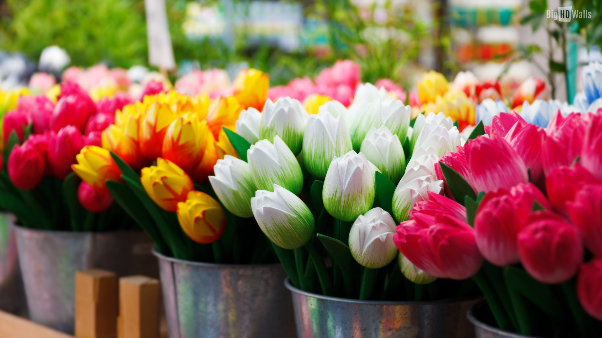 bunches-of-tulips-HD-wallpaper008