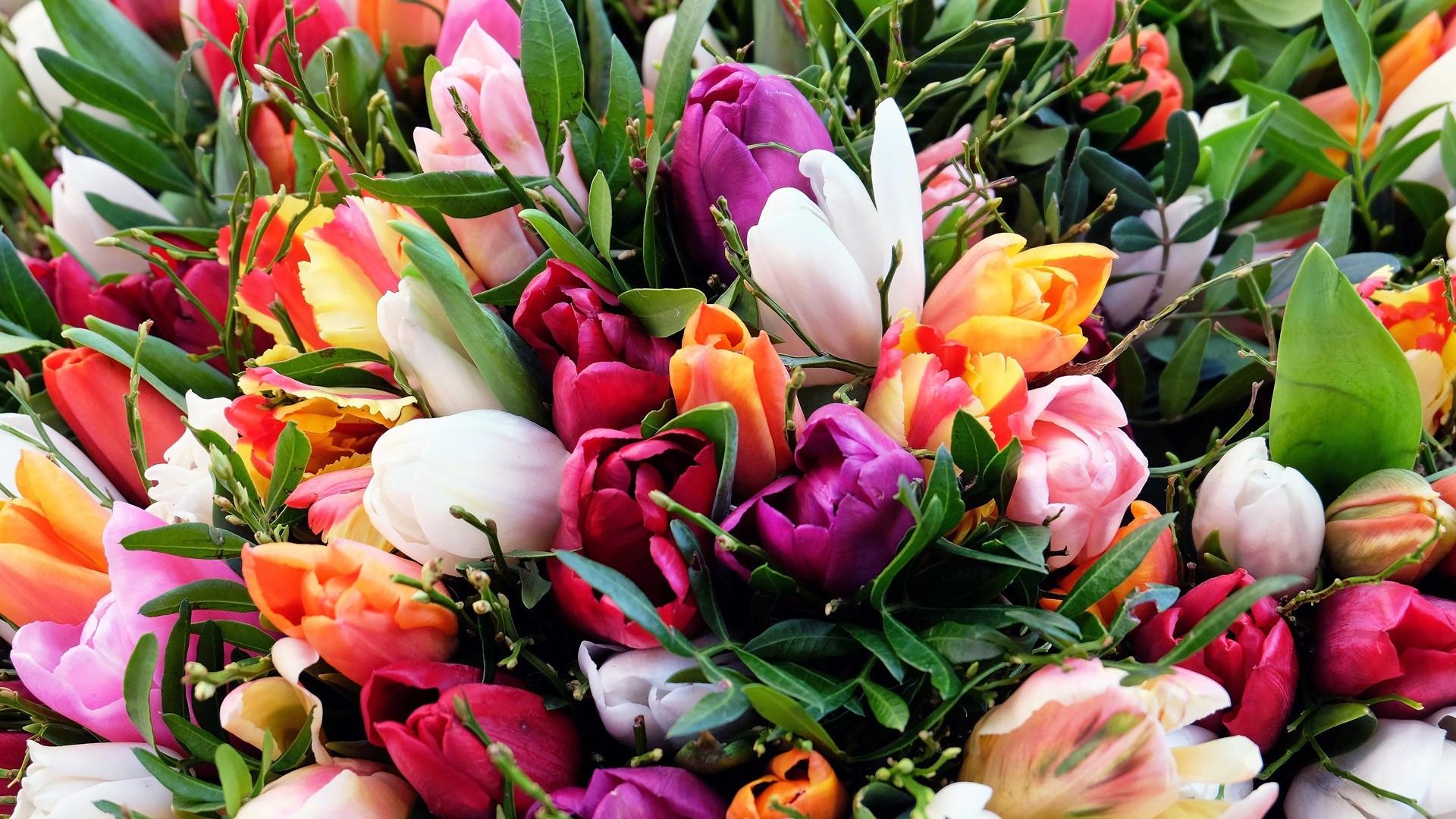 Wallpaper tulips, flowers, bouquet