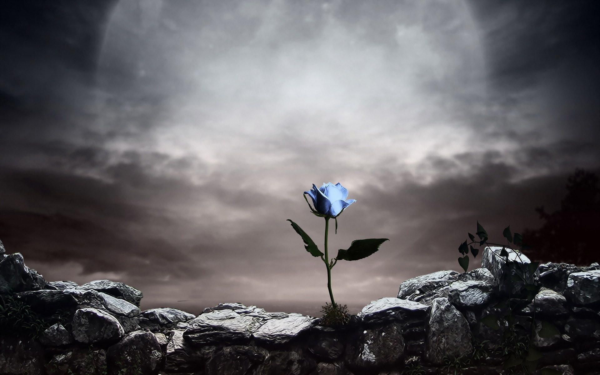 Gothique rose – Gothic – wallpapers