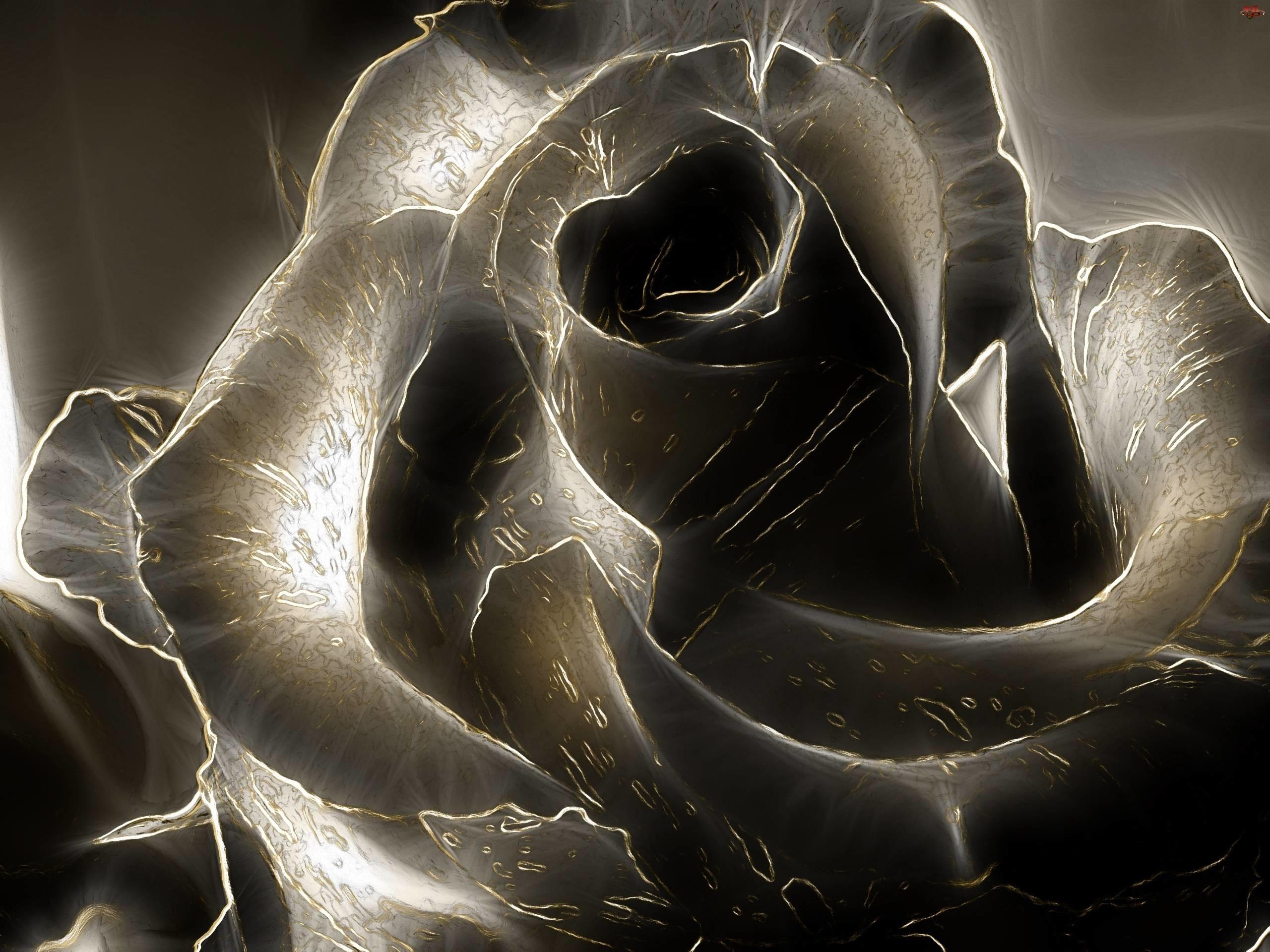 3D Black Rose Image 2206 2560x1920px – HD Wallpaper