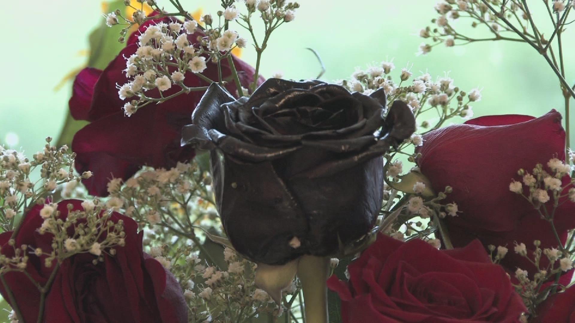 black rose roses wallpaper 11560704 fanpop