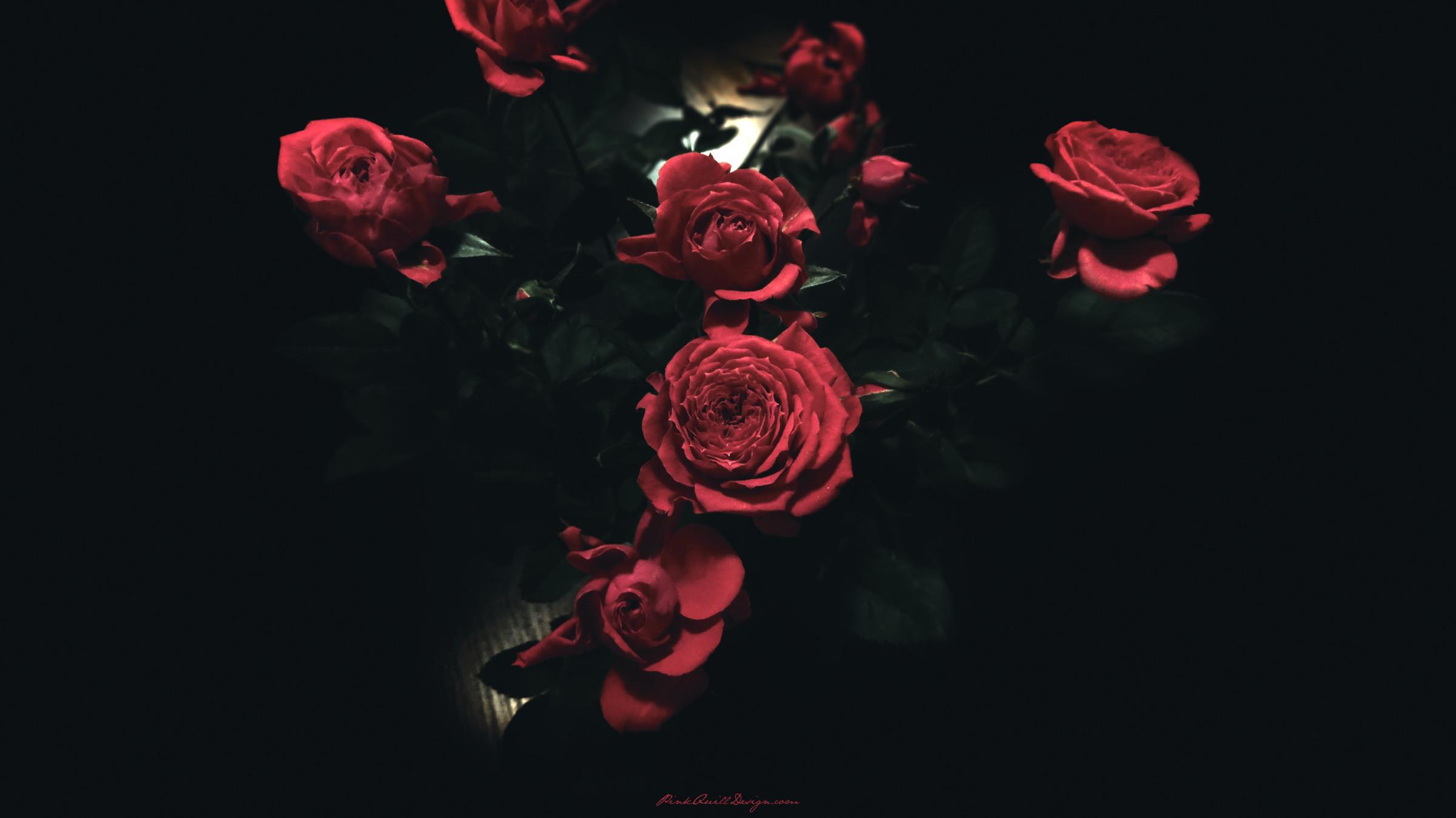 Dark Red Roses Tumblr