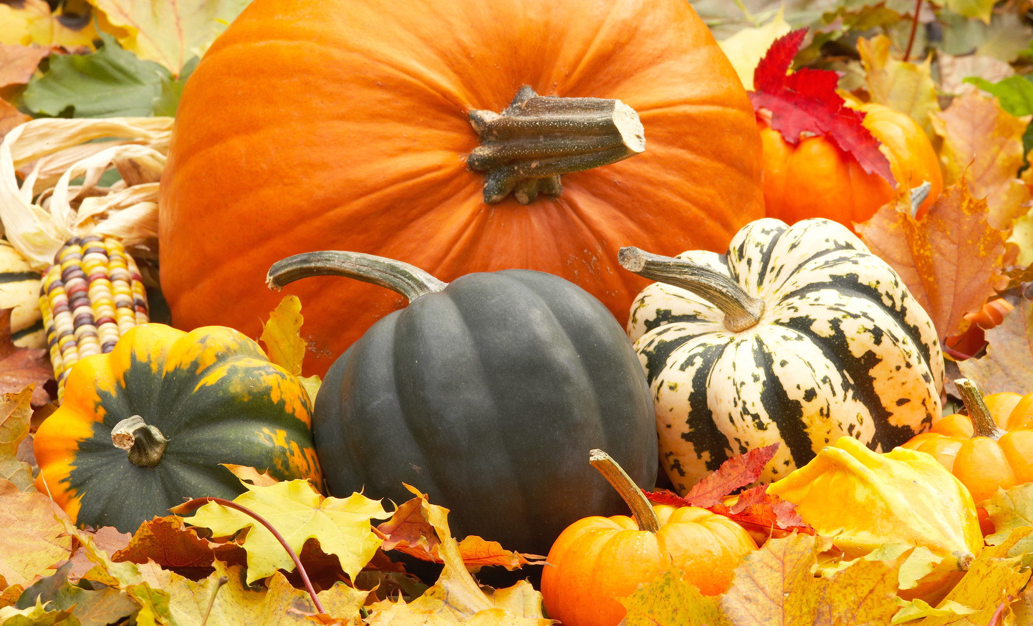 Gallery For > Fall Leaves And Pumpkins Wallpaper