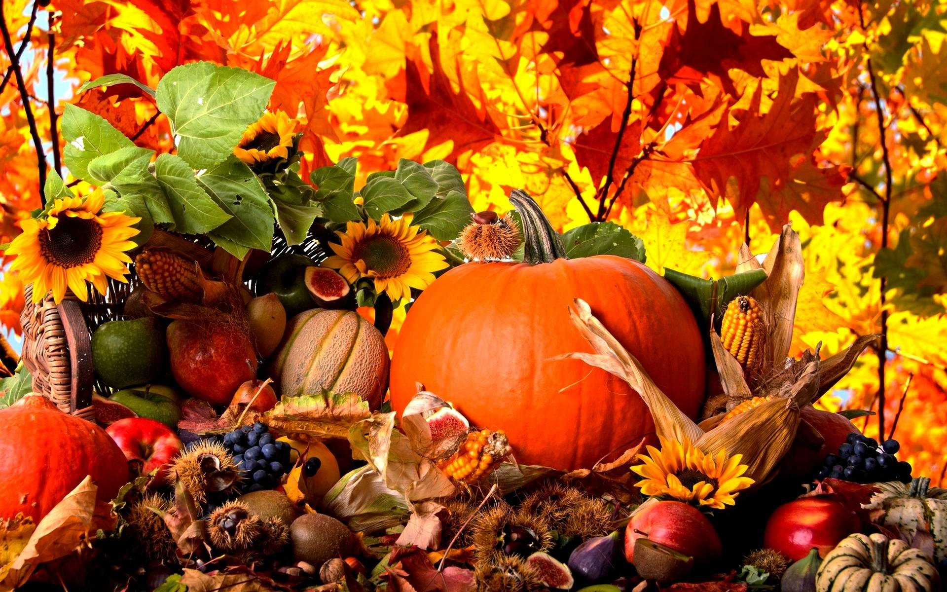 Fall Harvest Wallpaper High Quality