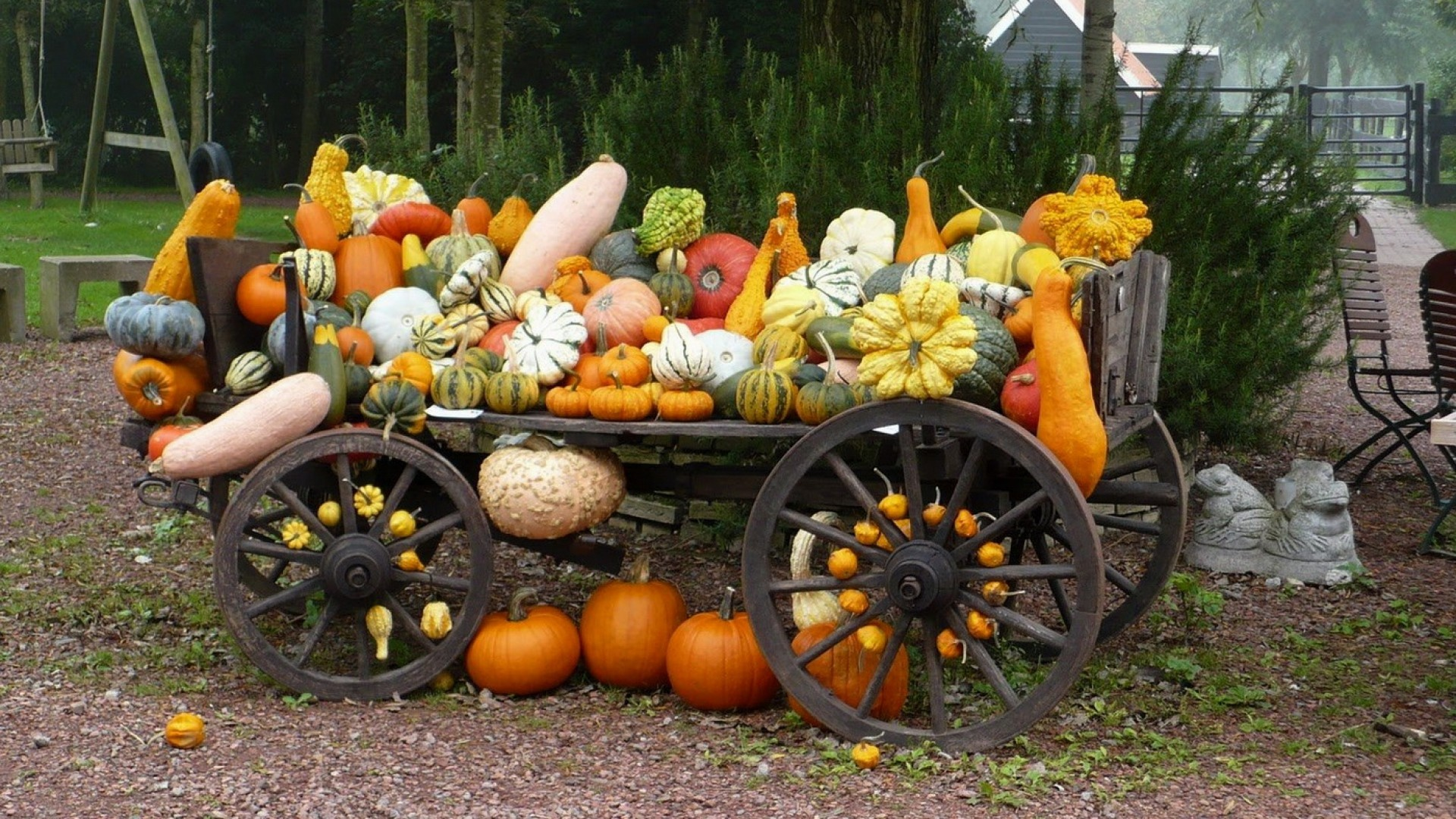 Wallpaper vehicle, pumpkin, crop, grades, variety, autumn