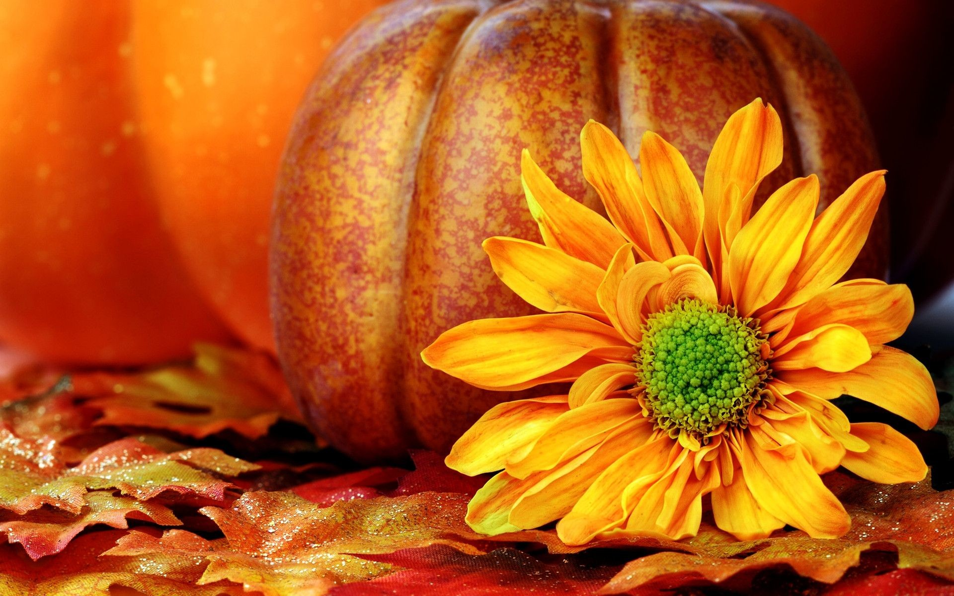 Free Desktop HD Pumpkin Wallpapers.