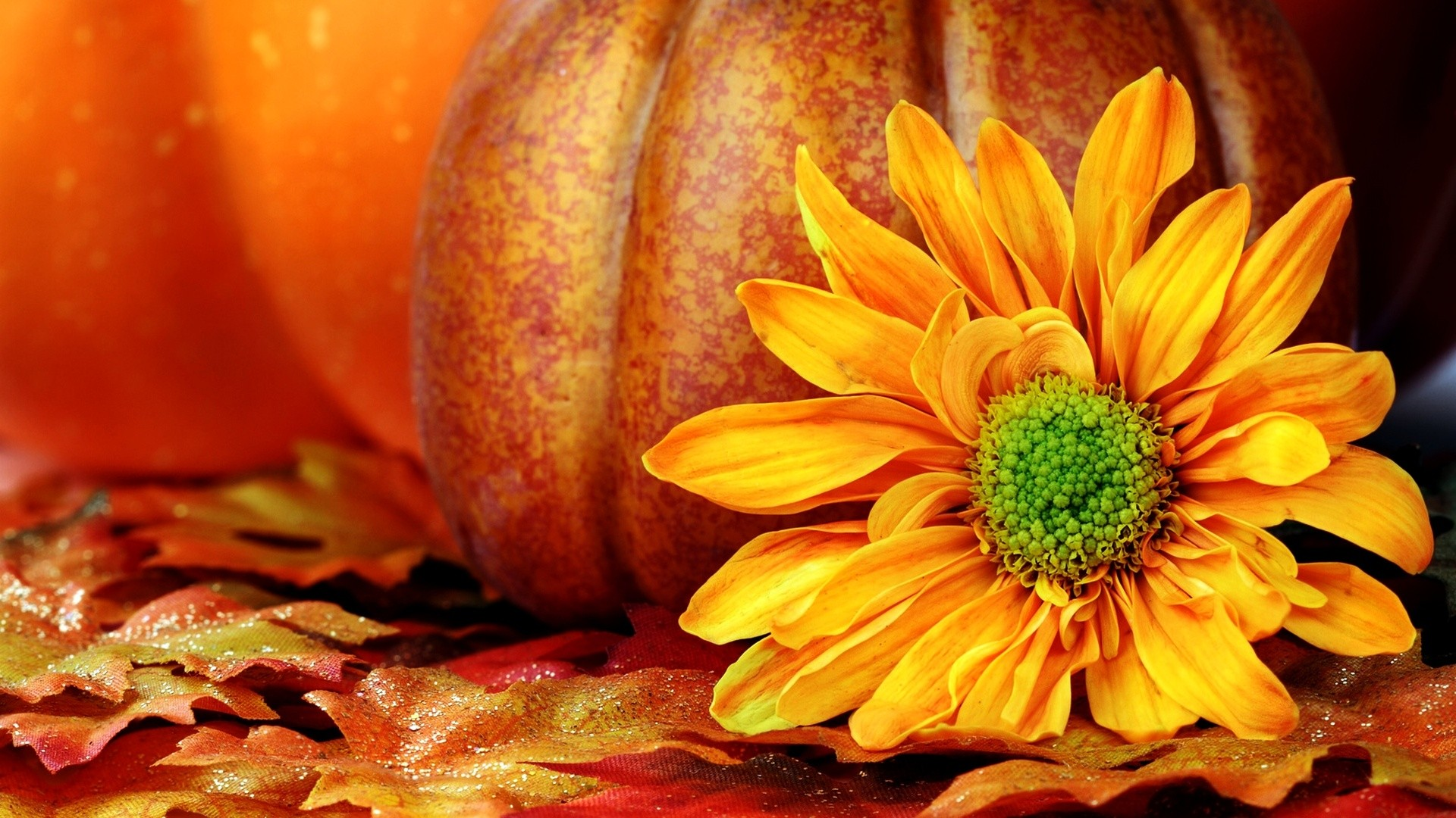 Backgrounds For 3d Fall Pumpkin Desktop Backgrounds Www .