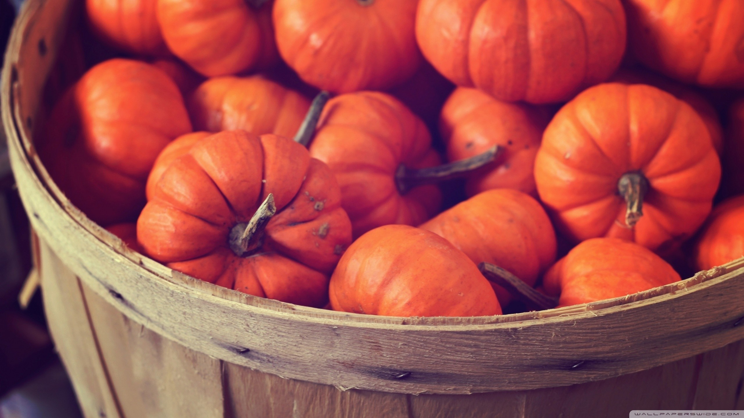 … basket full of pumpkins hd desktop wallpaper high definition …