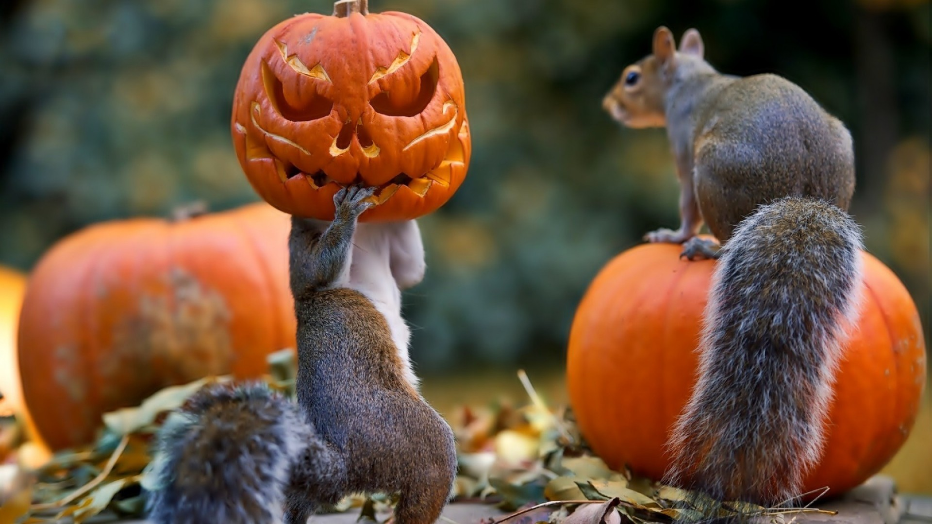Preview wallpaper halloween, squirrels, pumpkin, mask 1920×1080