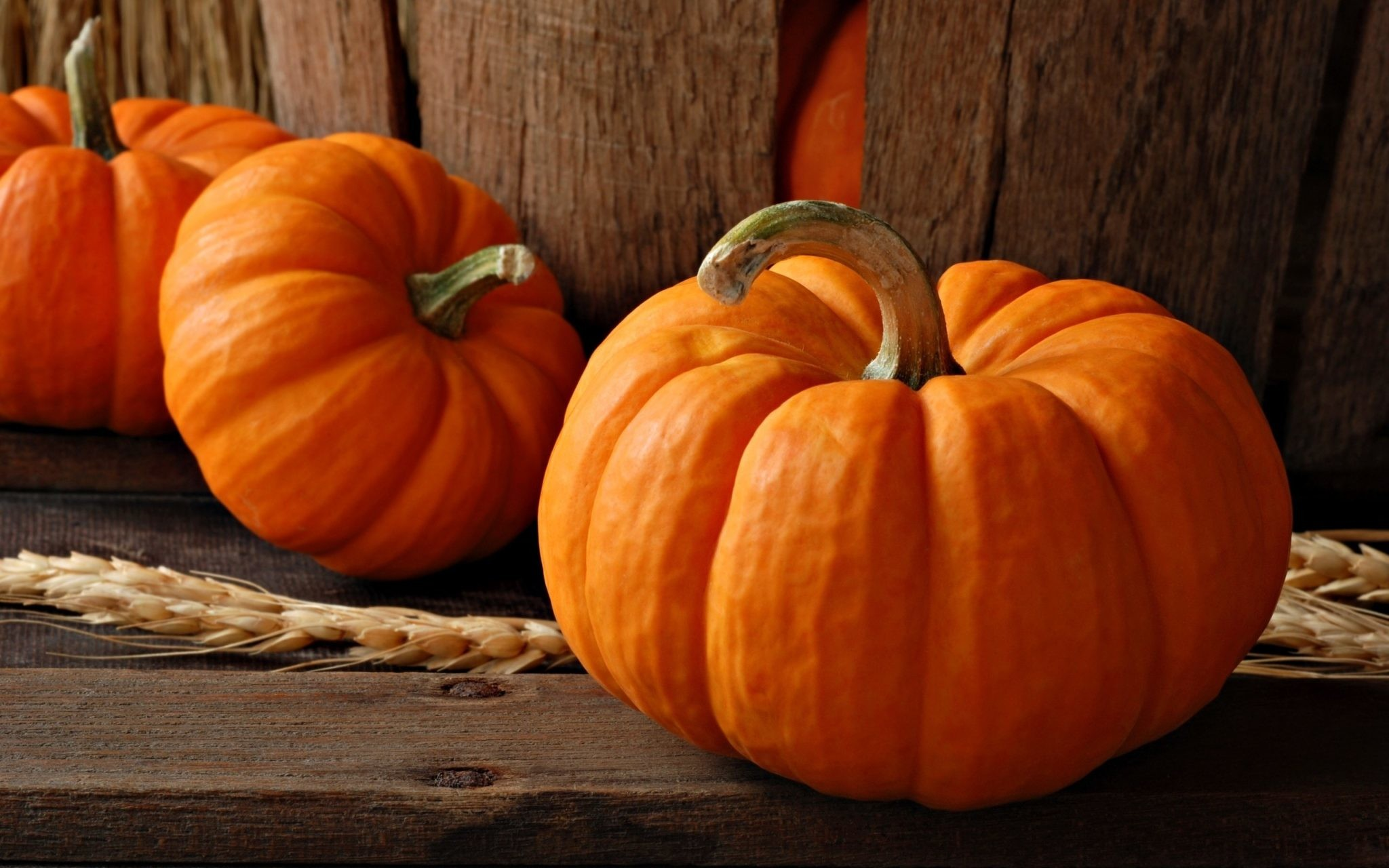 6 Reasons to Eat Pumpkin This Fall Season – And All Year! • Health Fitness  Revolution