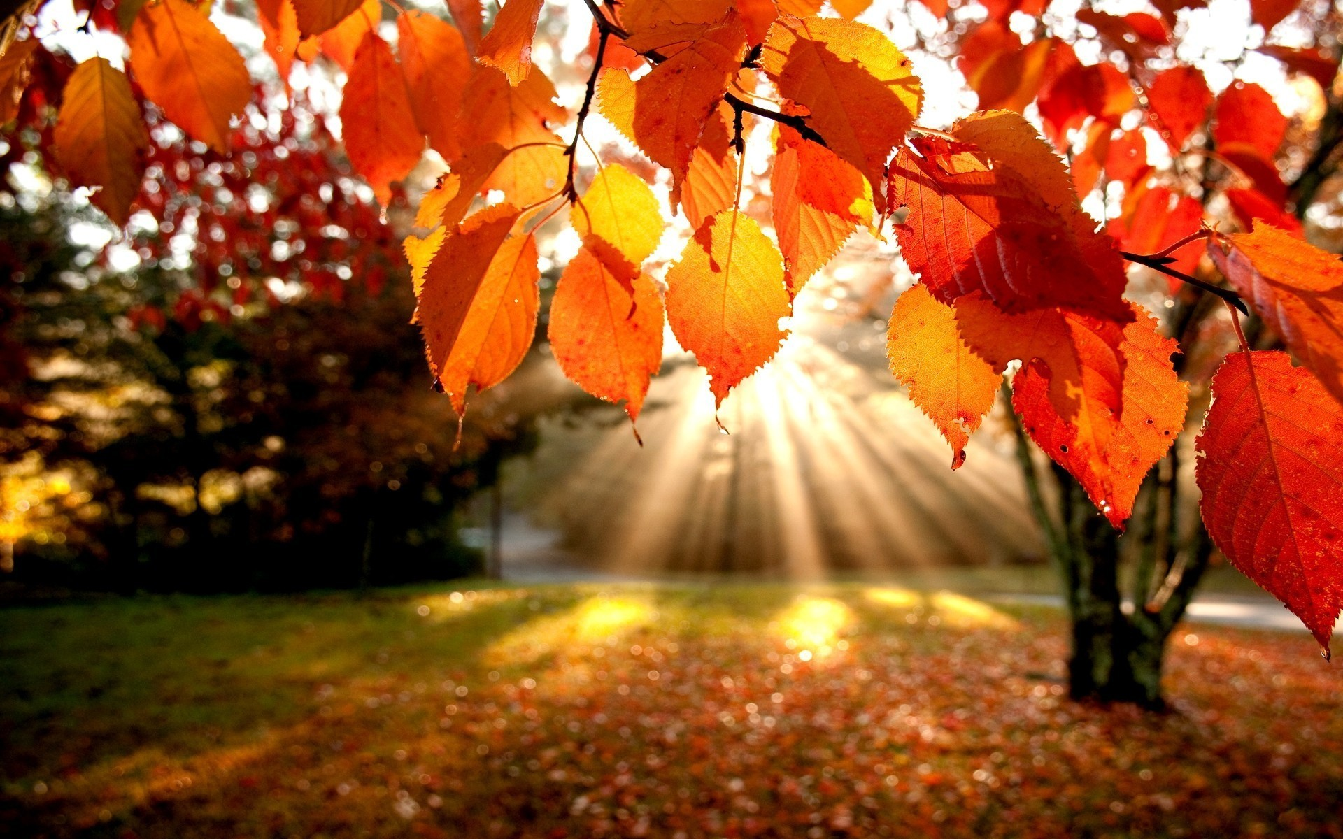 Fall Leaves Wallpapers for Desktop, wallpaper, Fall Leaves Wallpapers .