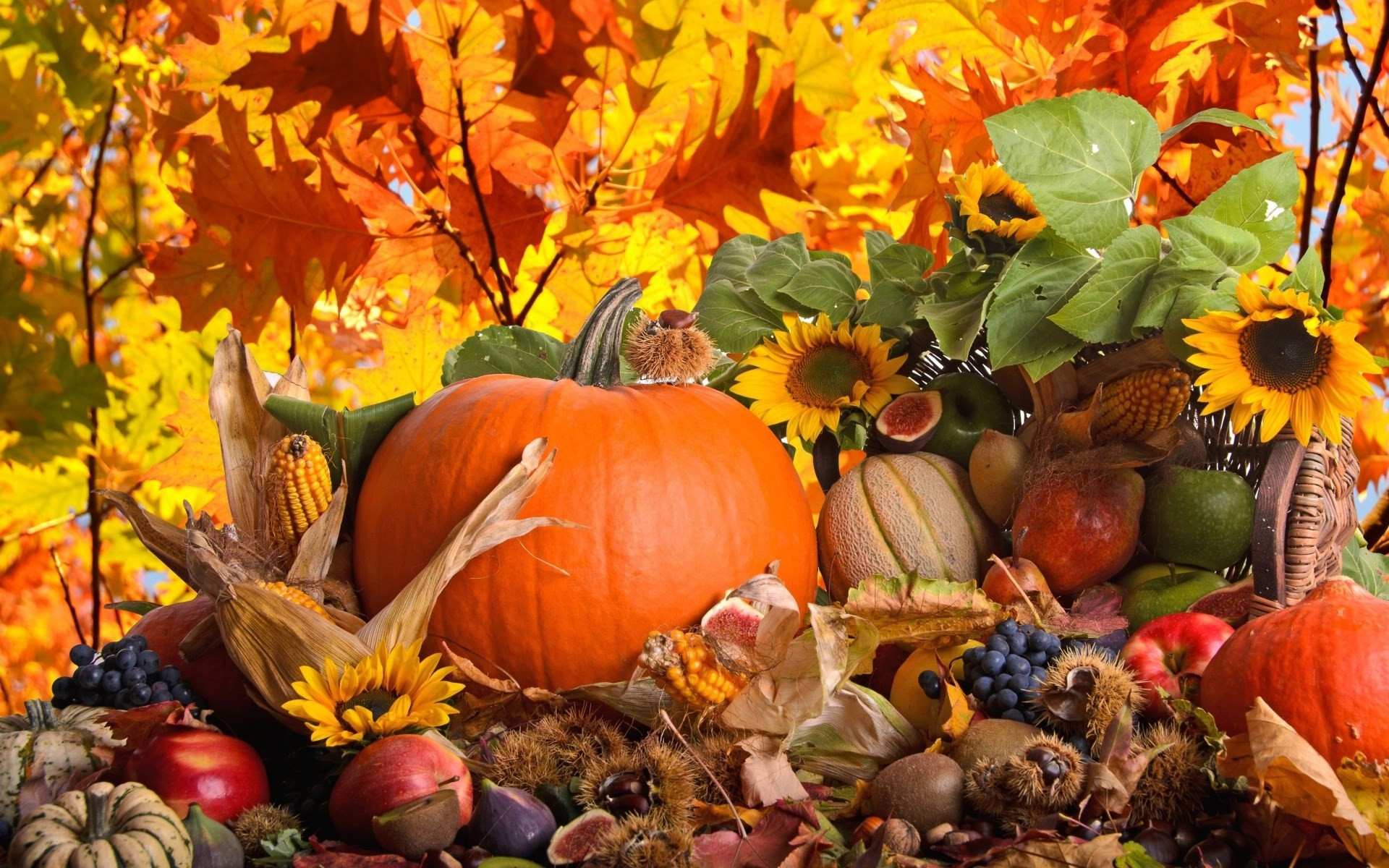 Paige Sheldon – pumpkin fall backgrounds for laptop – 1920 x 1200 px