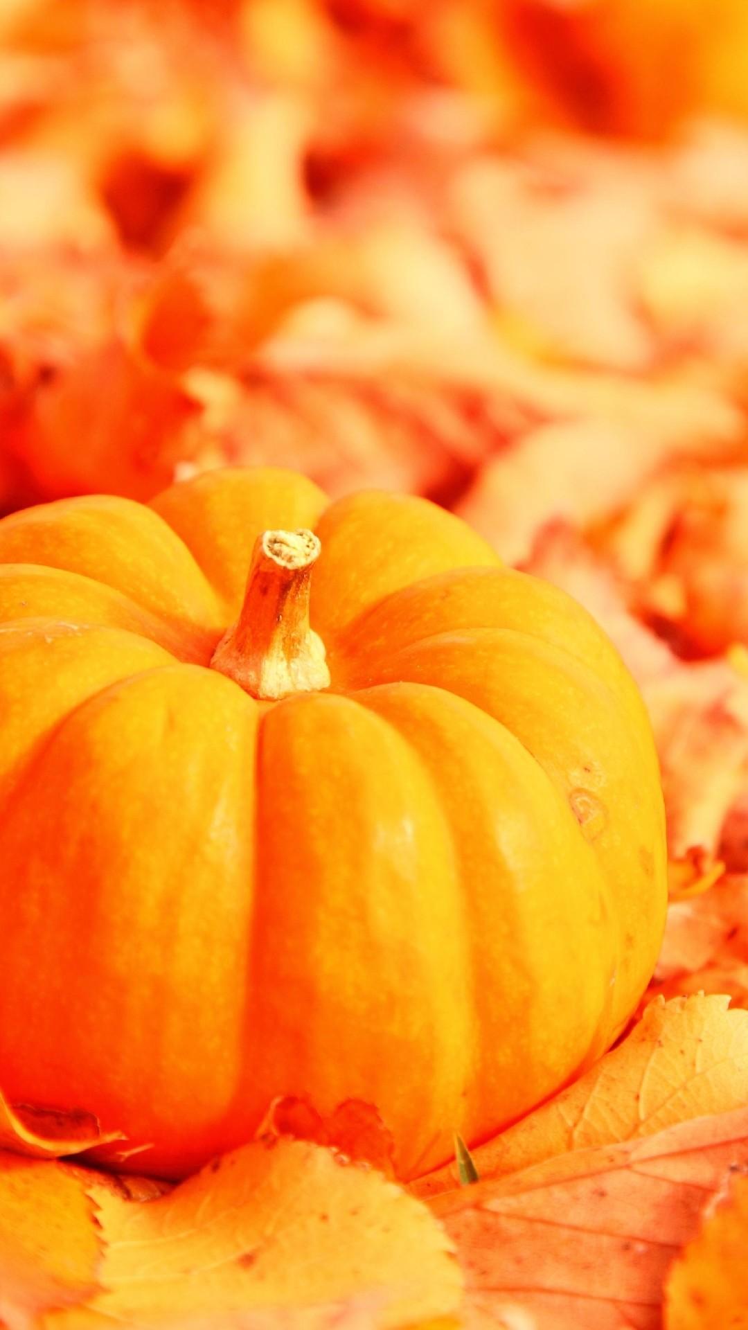 Iphone wallpaper Pumpkin in dead leaves …