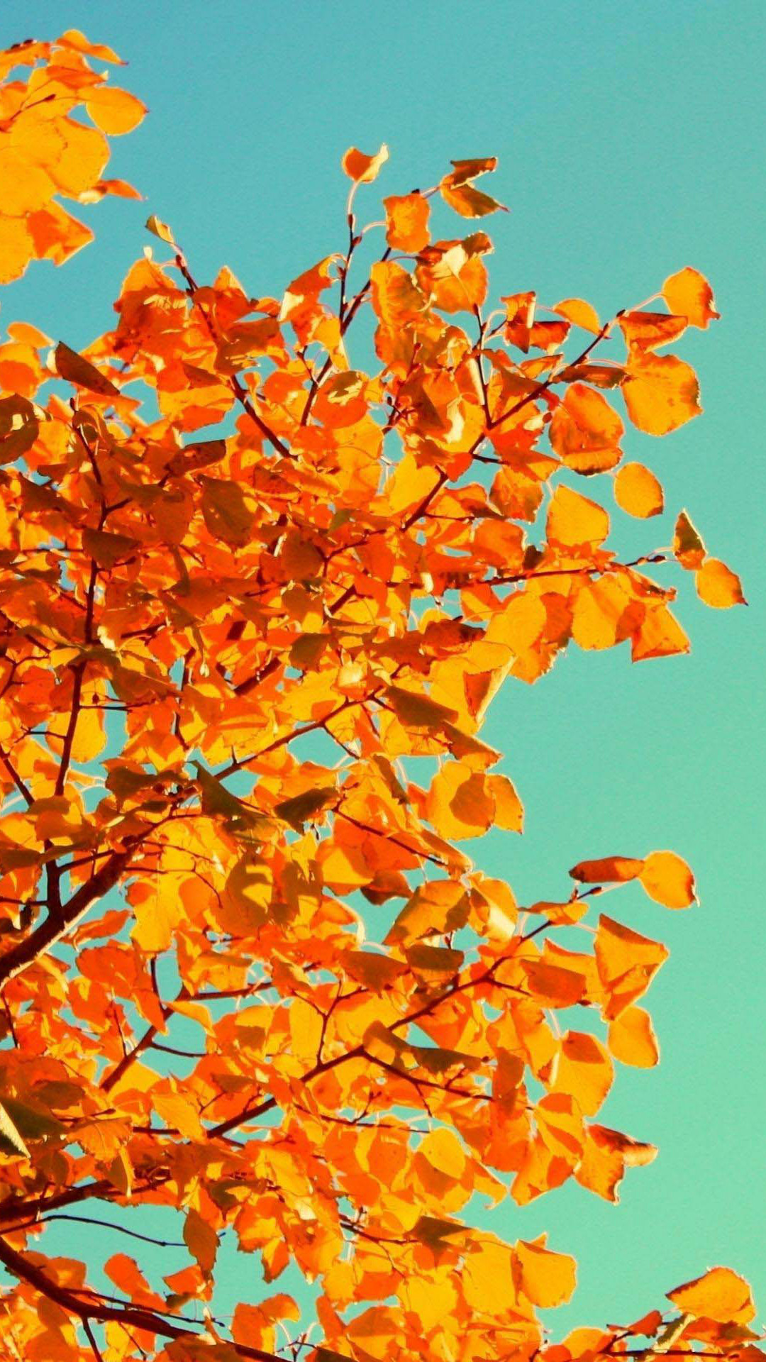 Explore Fall Backgrounds Iphone and more!