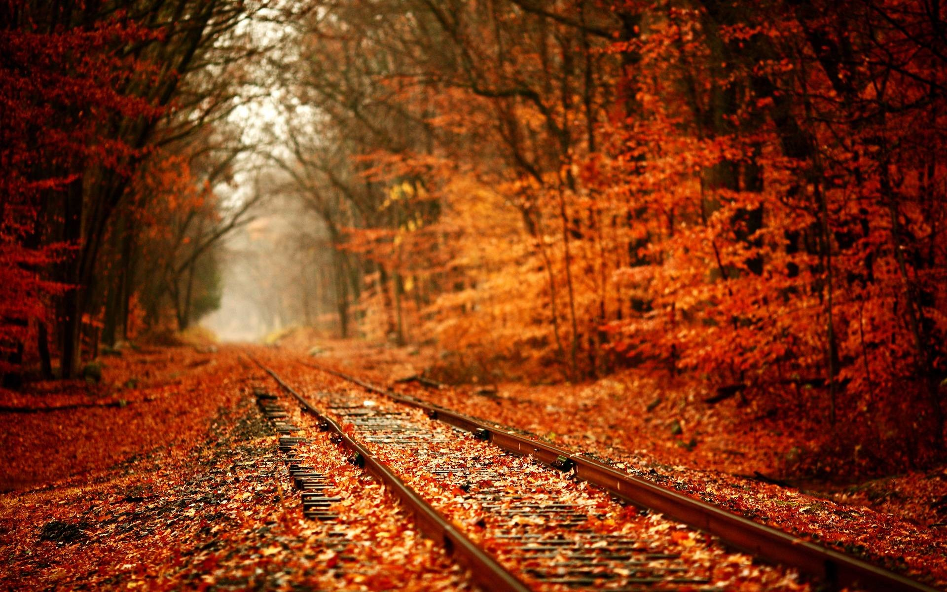 Autumn Leaves Railroad Wallpapers