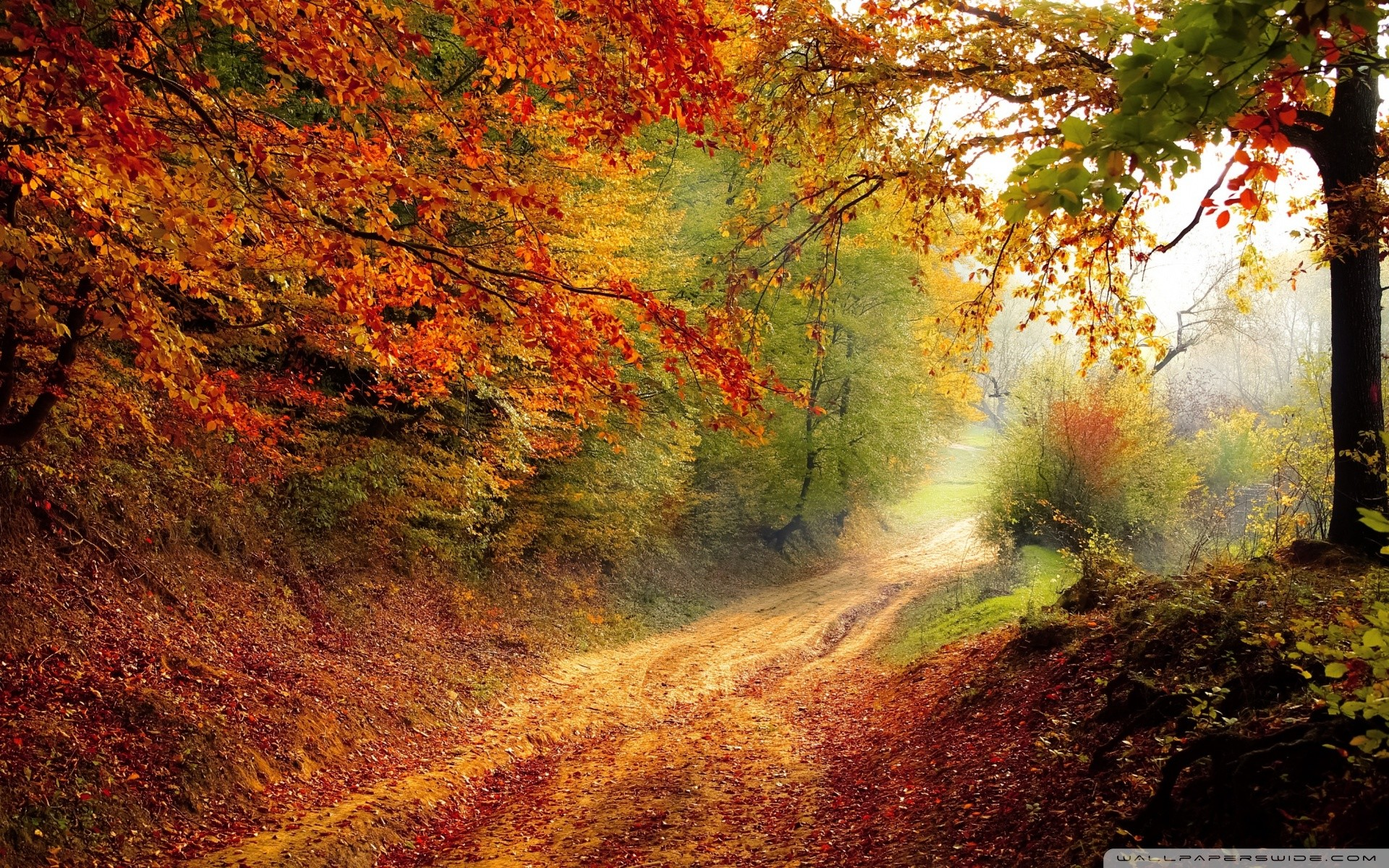 Best Fall leaves wallpaper ideas on Pinterest Fall wallpaper