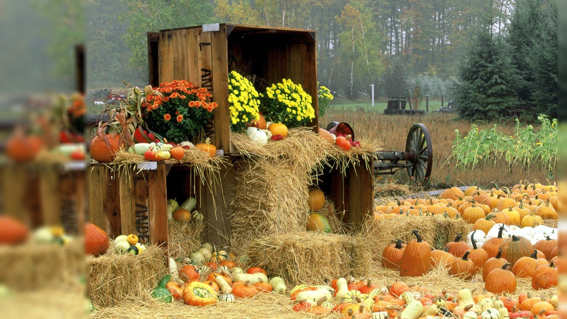 59 Fall Pumpkin Wallpaper And Screensavers