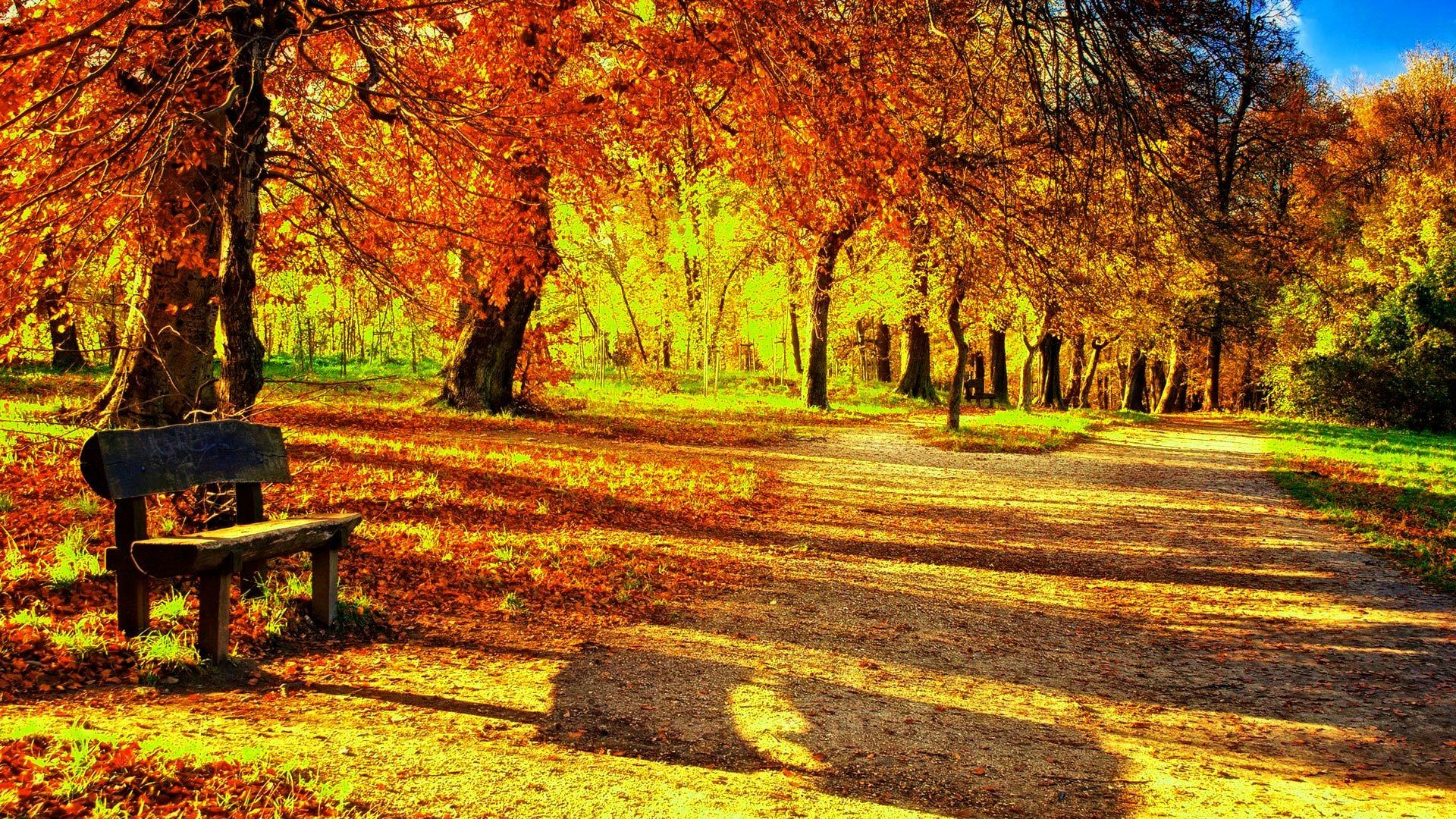 Image for Autumn Leaves Wallpaper Desktop