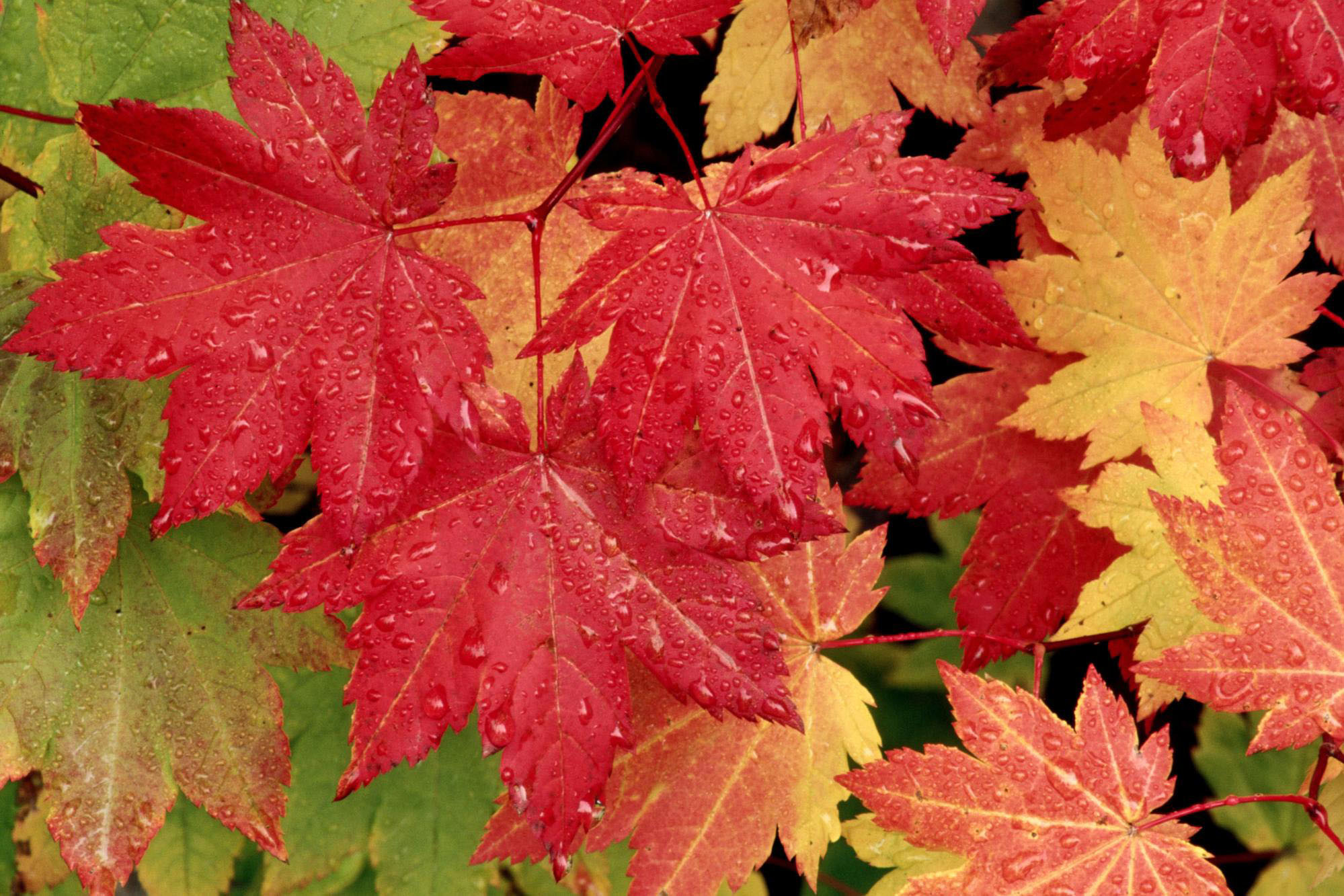 -wallpapers-autumn-leaf-fall-leaves-trees-